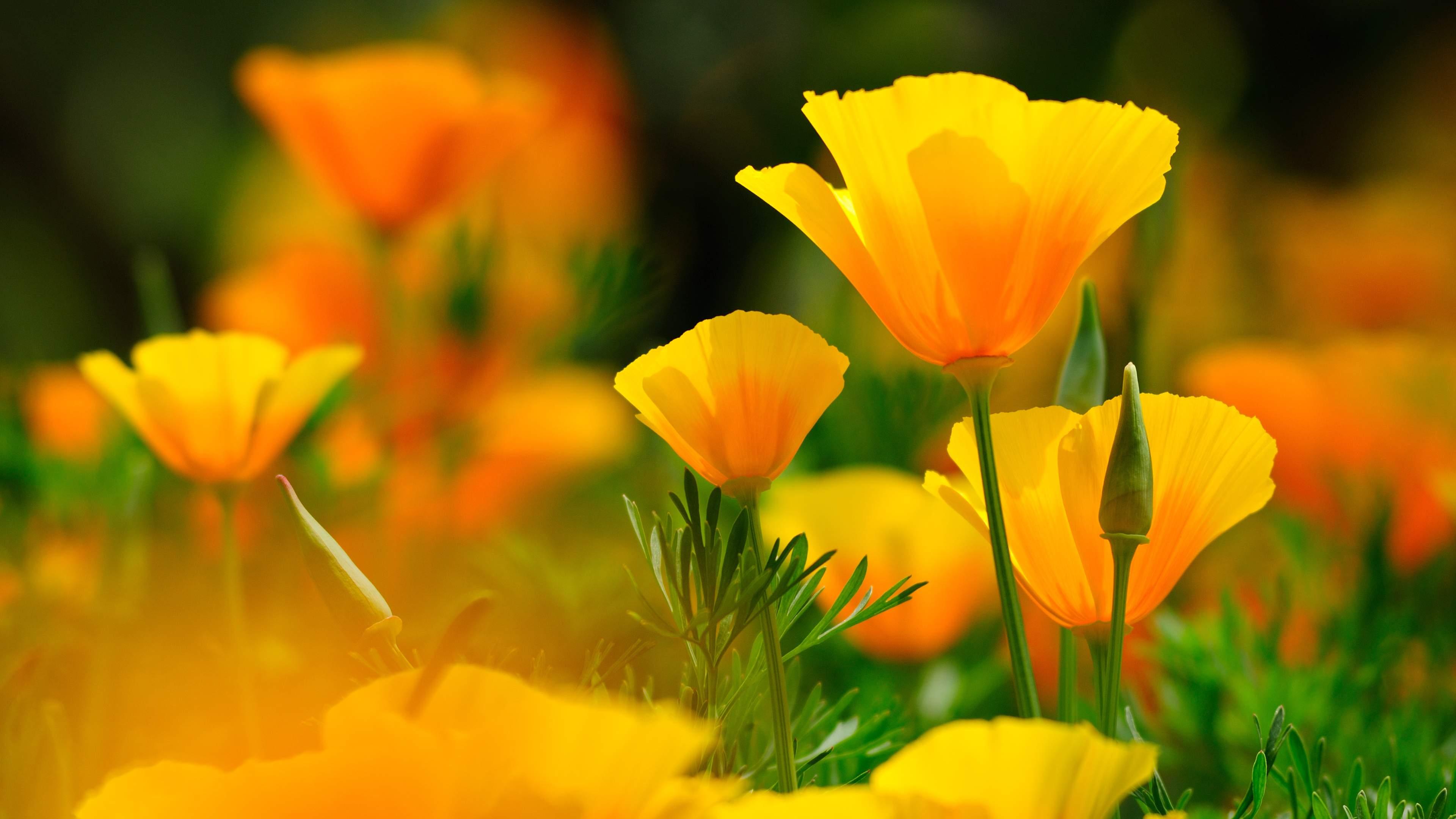 Flowers 4K Wallpapers - Top Free Flowers 4K Backgrounds ...