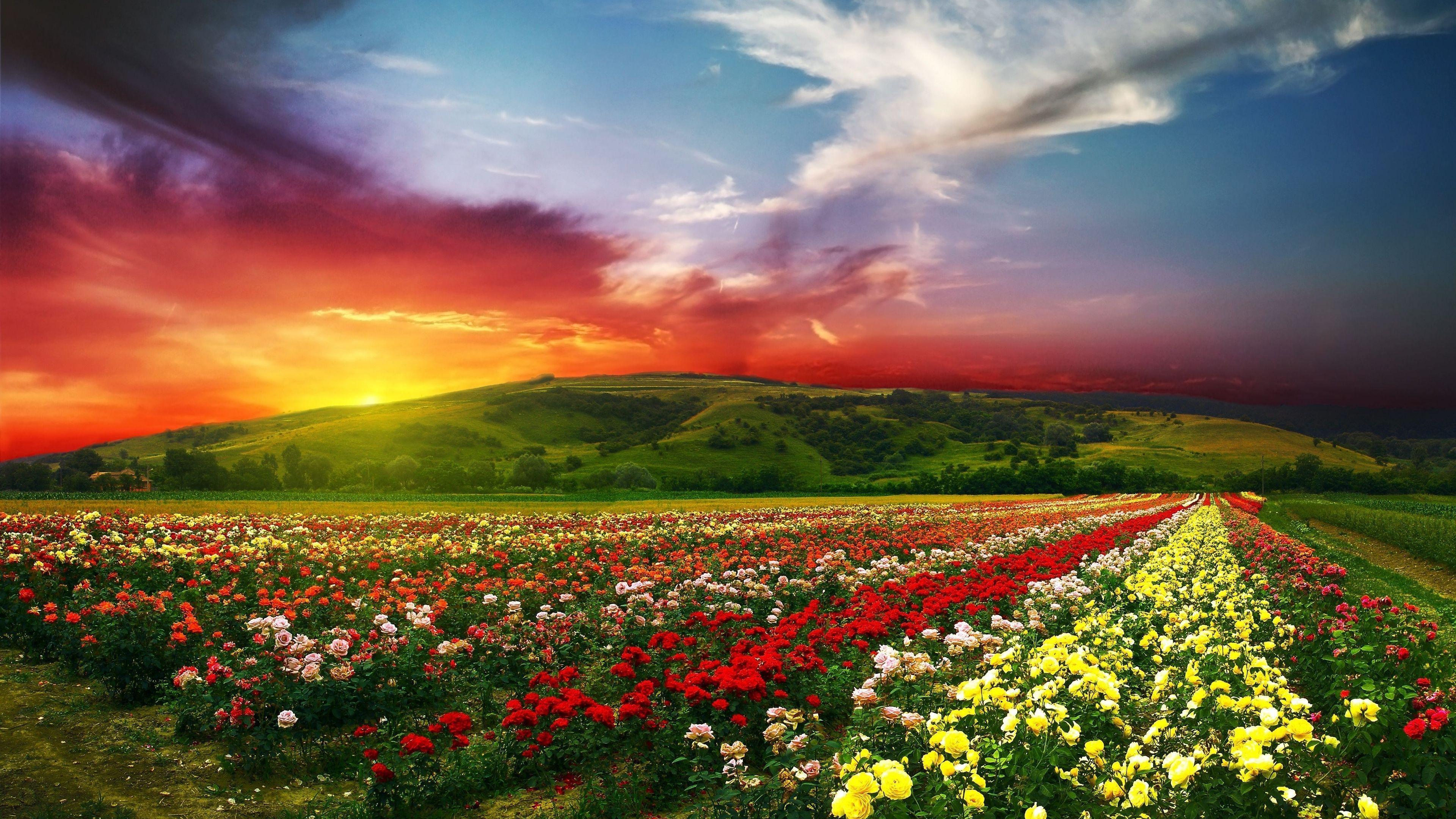 Flowers 4k Wallpapers Top Free Flowers 4k Backgrounds