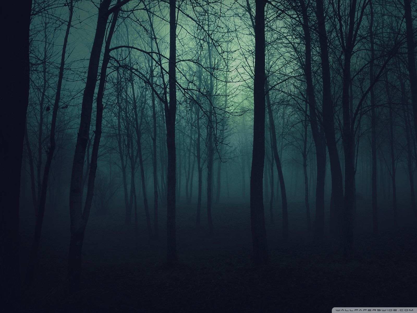 Dark Forest 4k Ultra Hd Wallpapers Top Free Dark Forest 4k Ultra Hd Backgrounds Wallpaperaccess