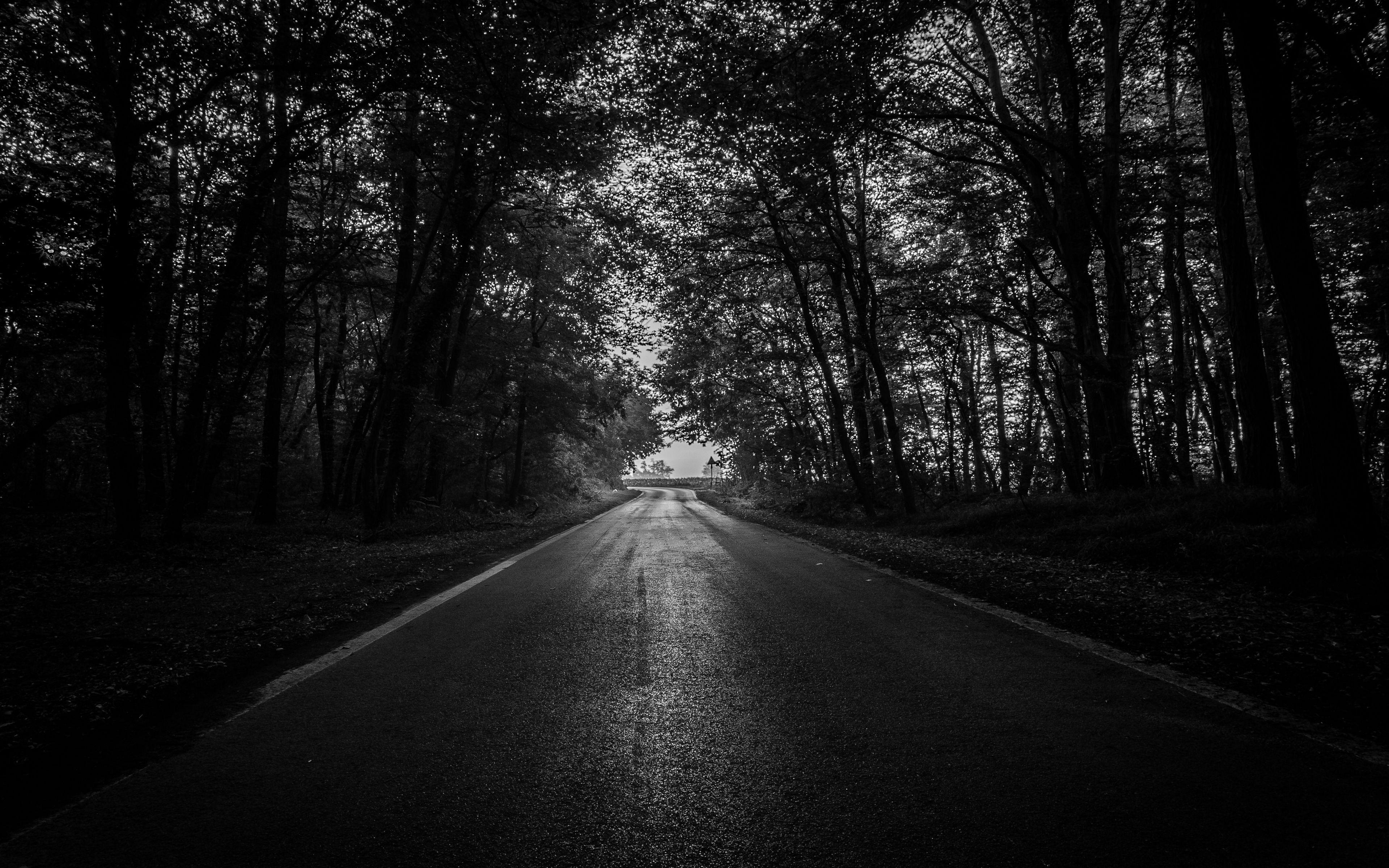 Dark Forest 4K Ultra HD Wallpapers - Top Free Dark Forest ...