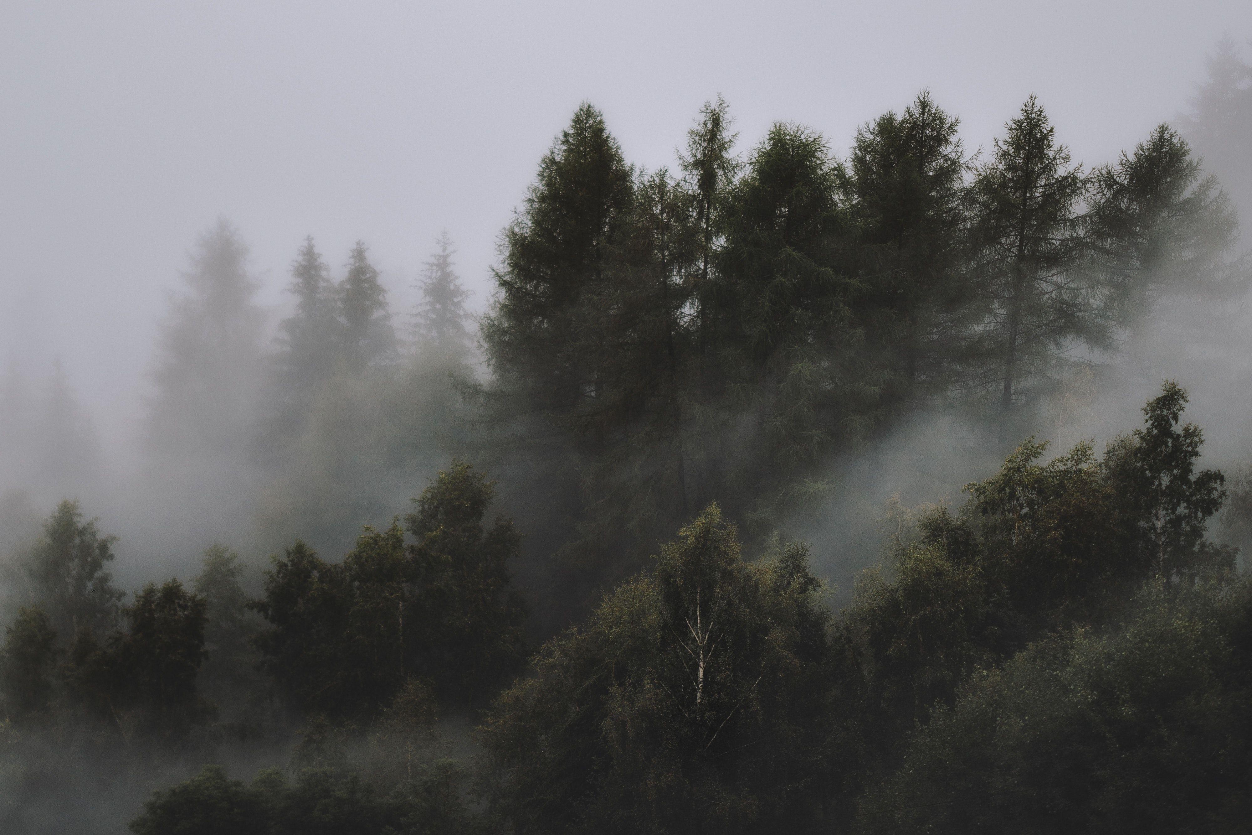 Dark Forest 4k Ultra Hd Wallpapers Top Free Dark Forest