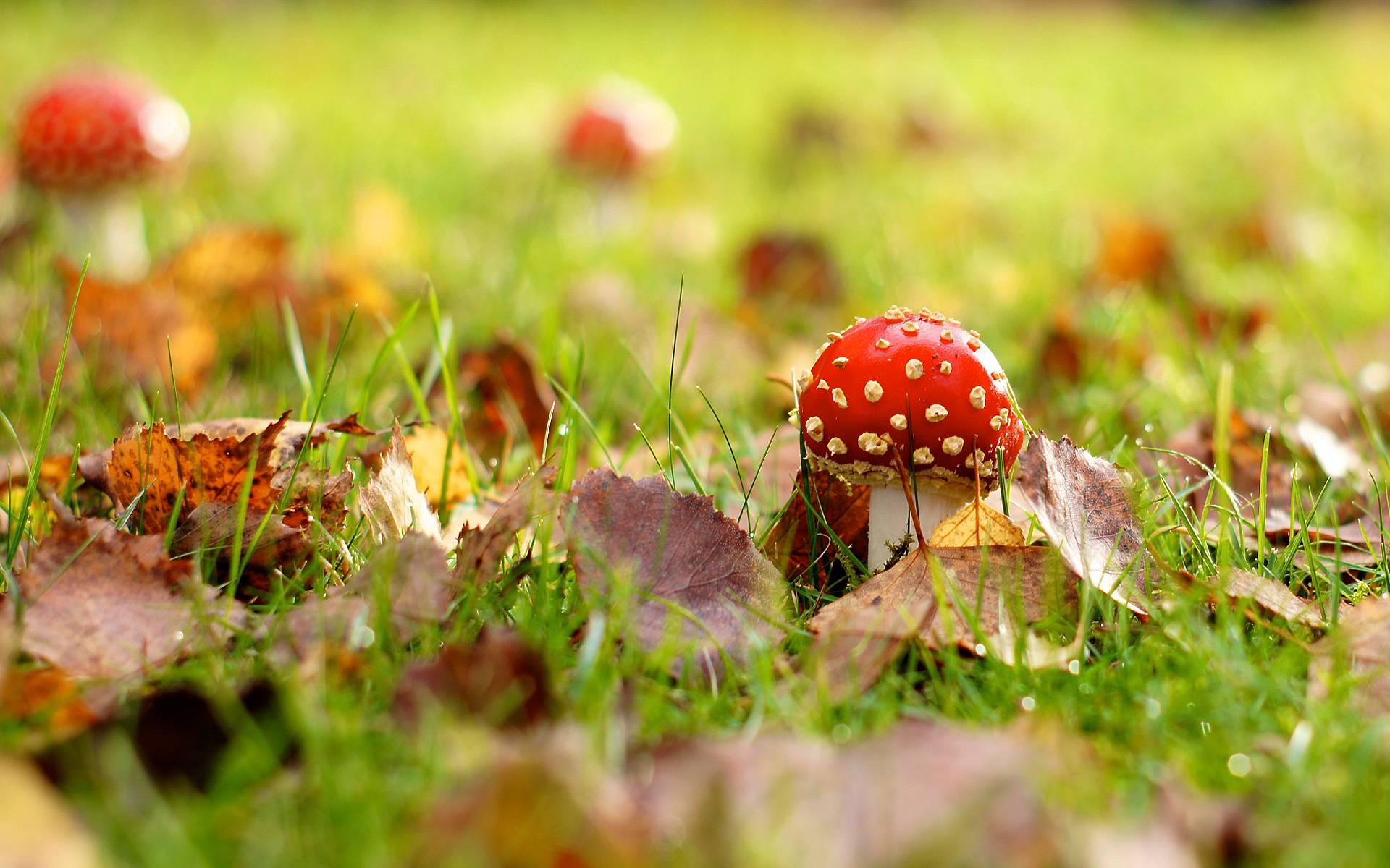 Mushroom Wallpapers Top Free Mushroom Backgrounds Wallpaperaccess