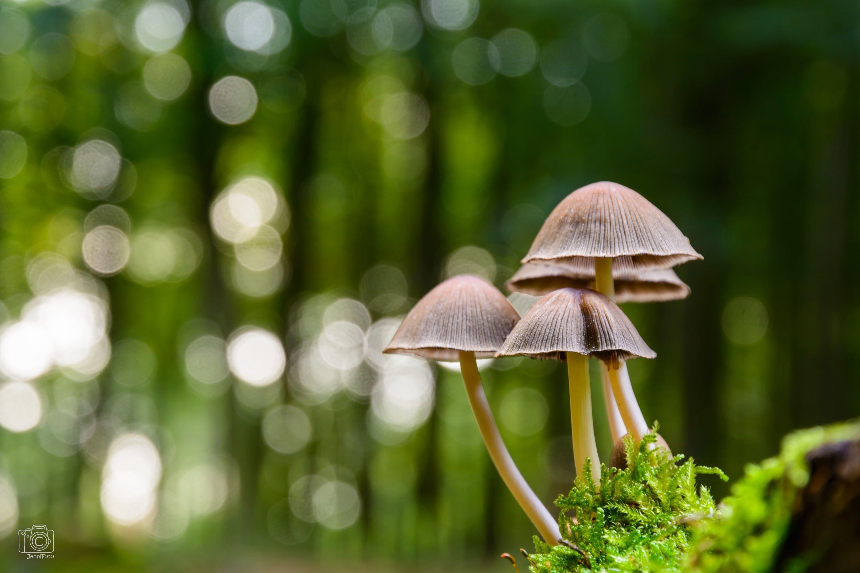 White Forest Mushroom Digital Photo Wallpaper