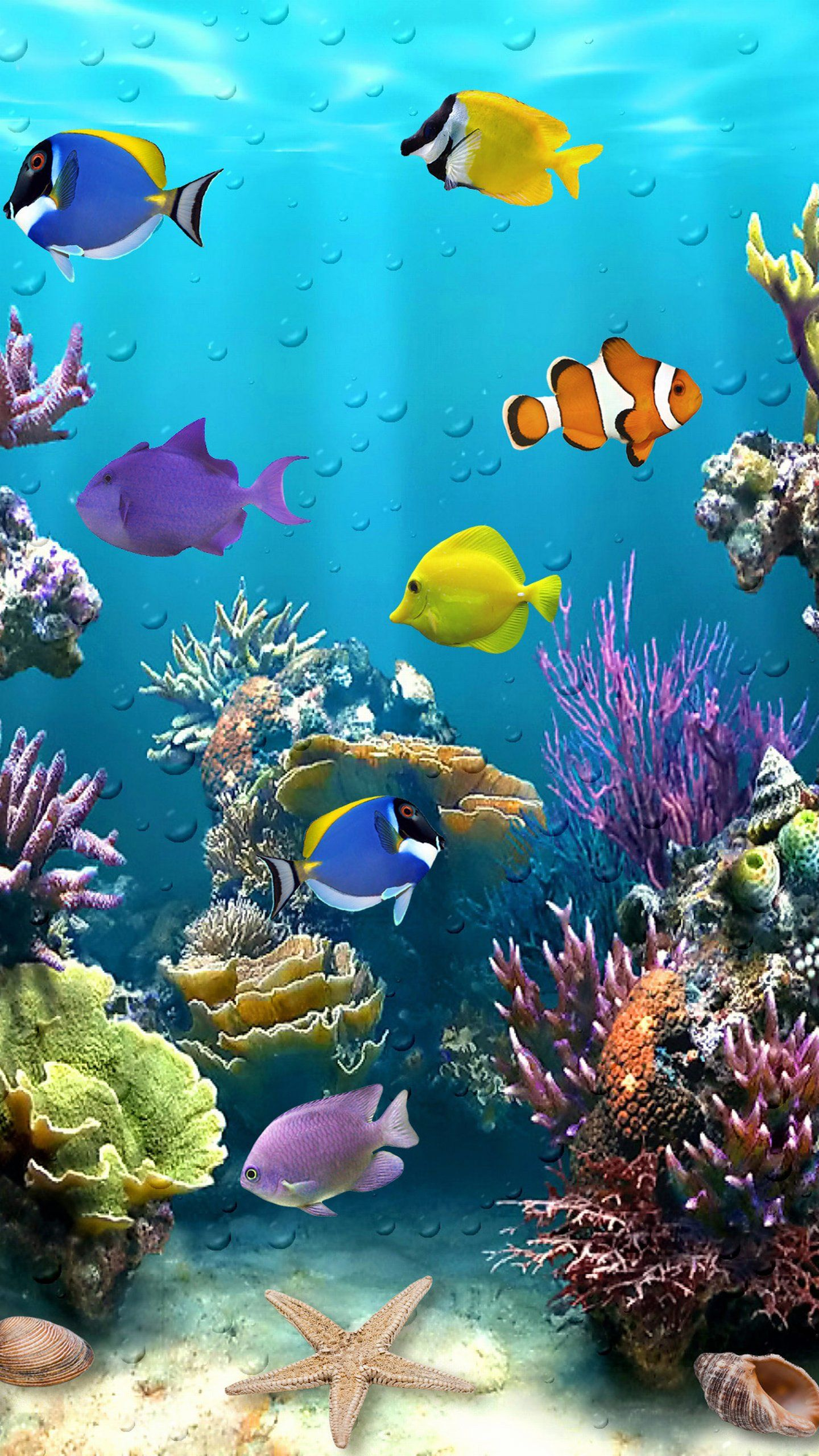 Fish Phone Wallpapers Top Free Fish Phone Backgrounds