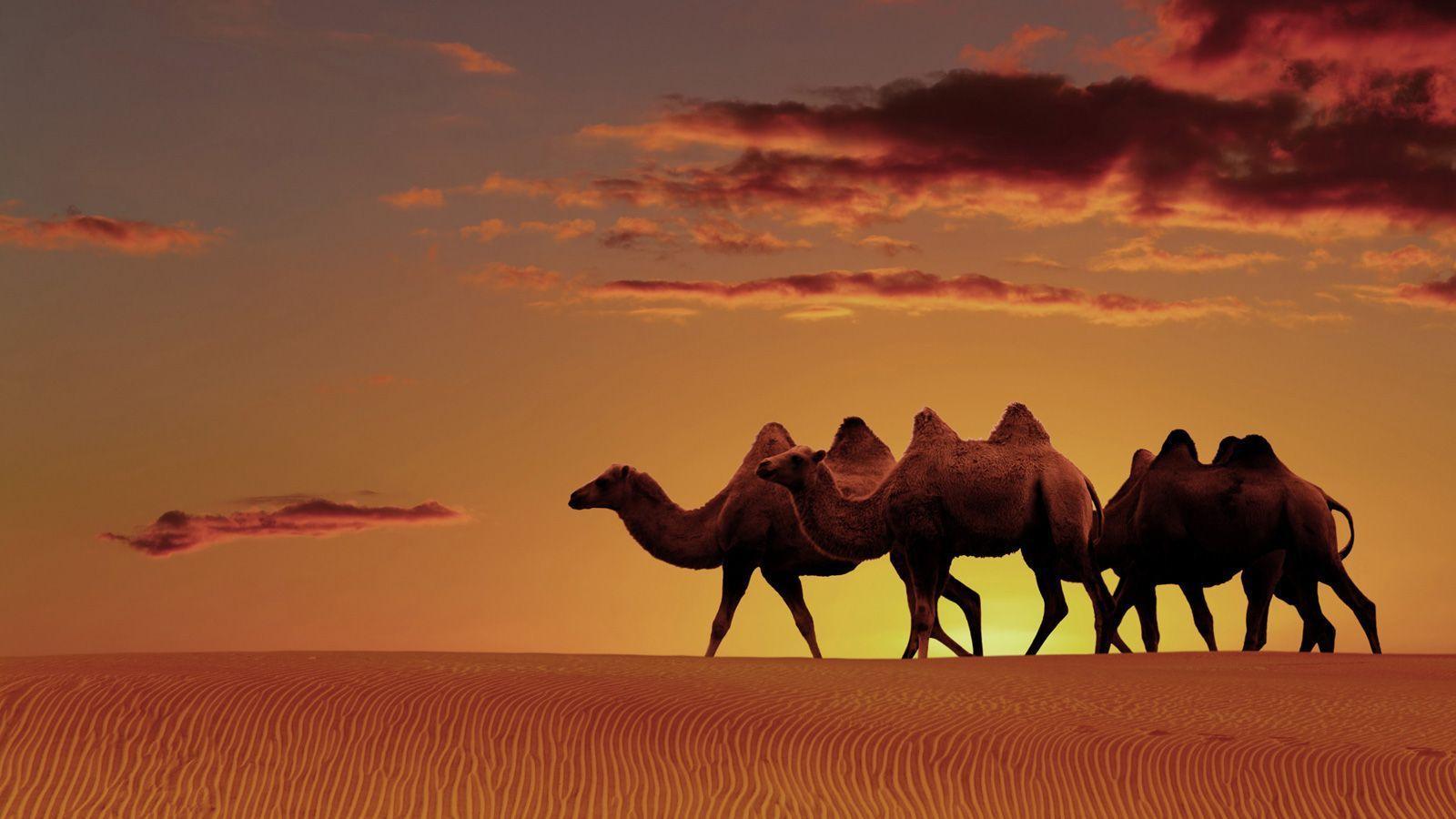 Arabian Desert Wallpapers Top Free Arabian Desert