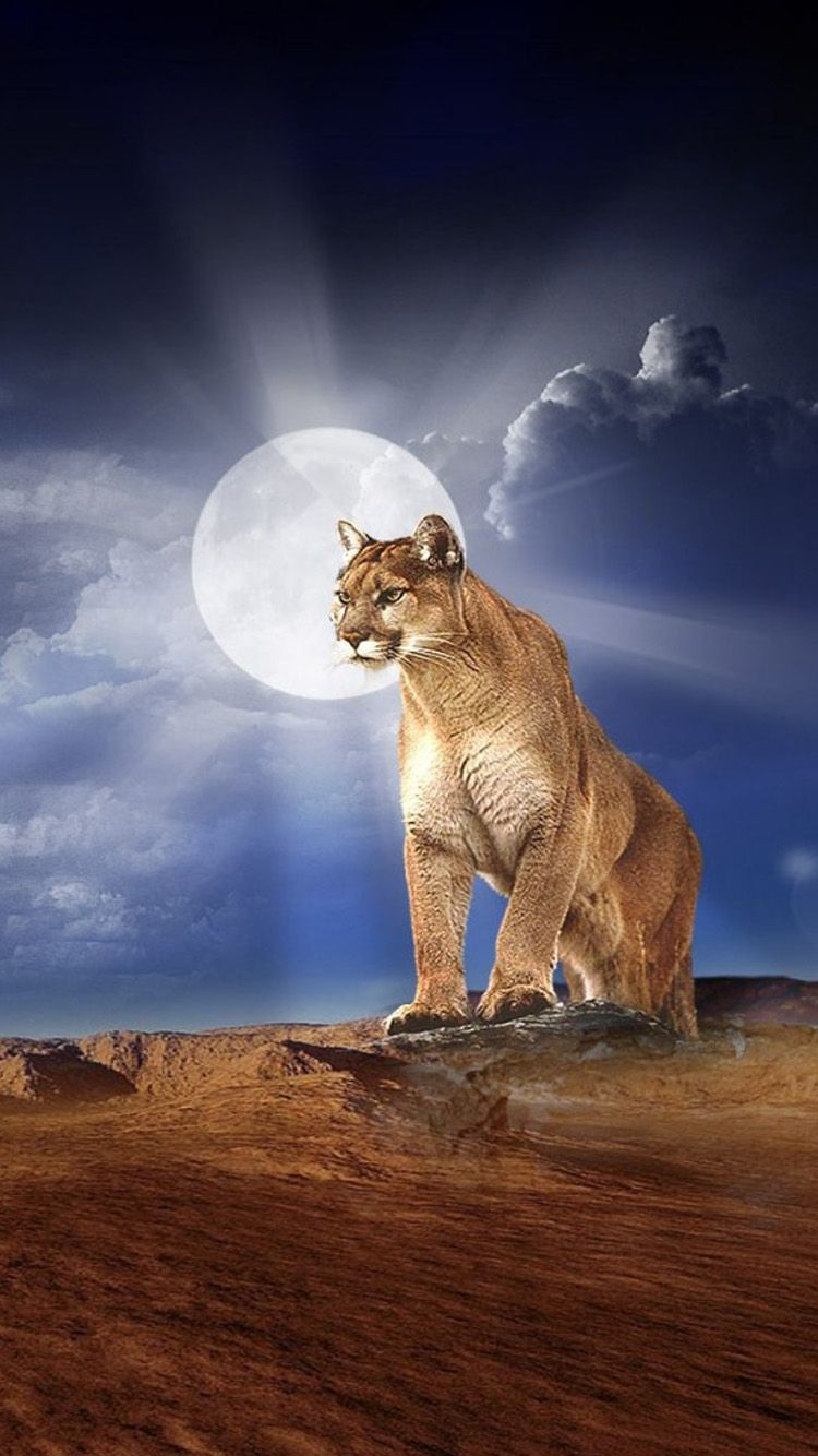 Mountain Lion Wallpapers Top Free Mountain Lion Backgrounds