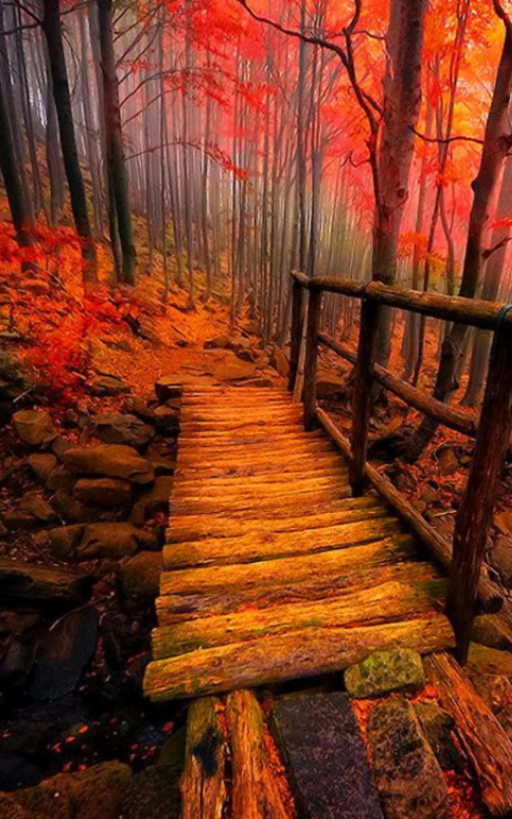 Hình nền di động 1000x1600 Autumn Path