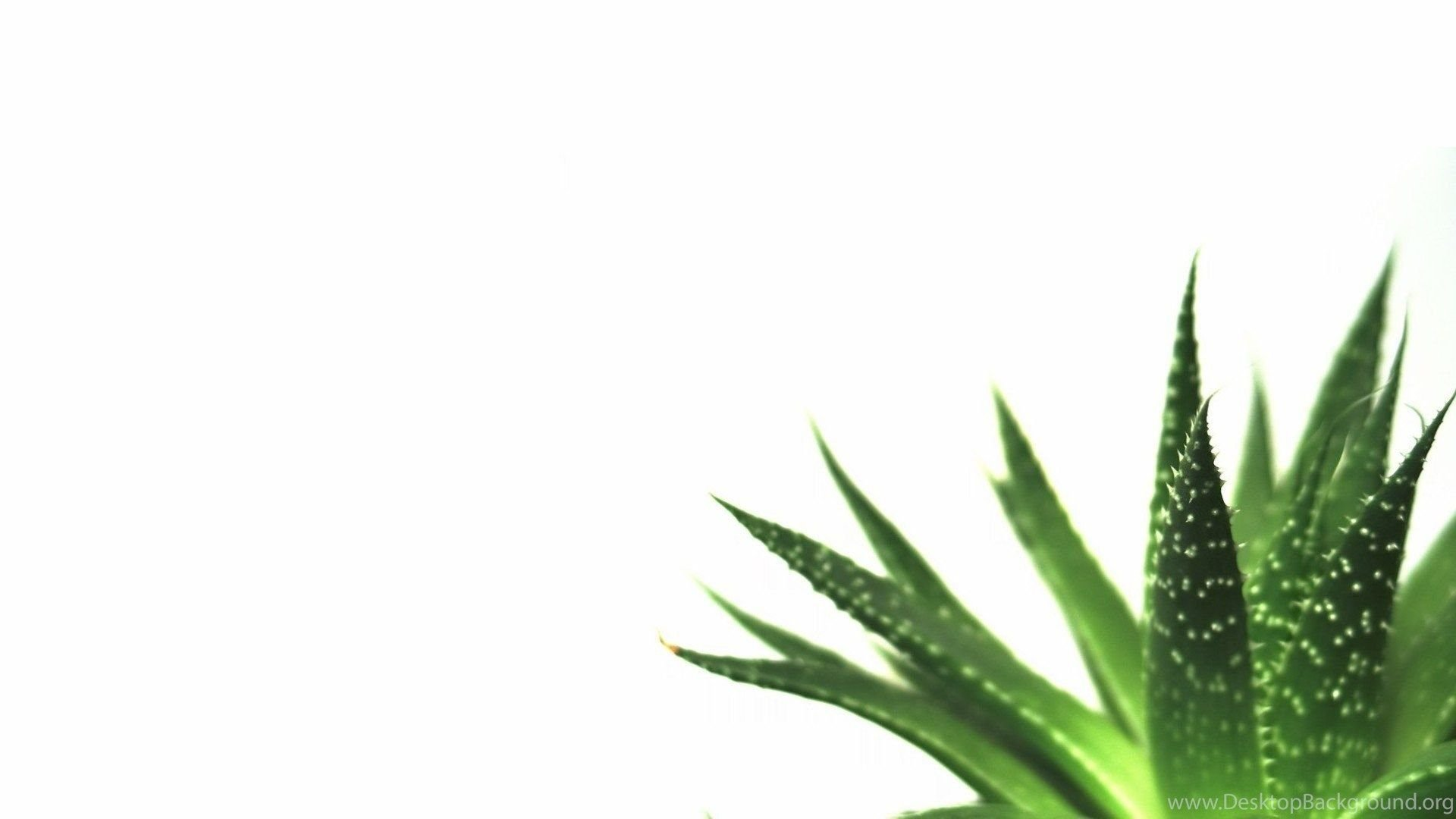White Minimalist Desktop Wallpapers - Top Free White ...