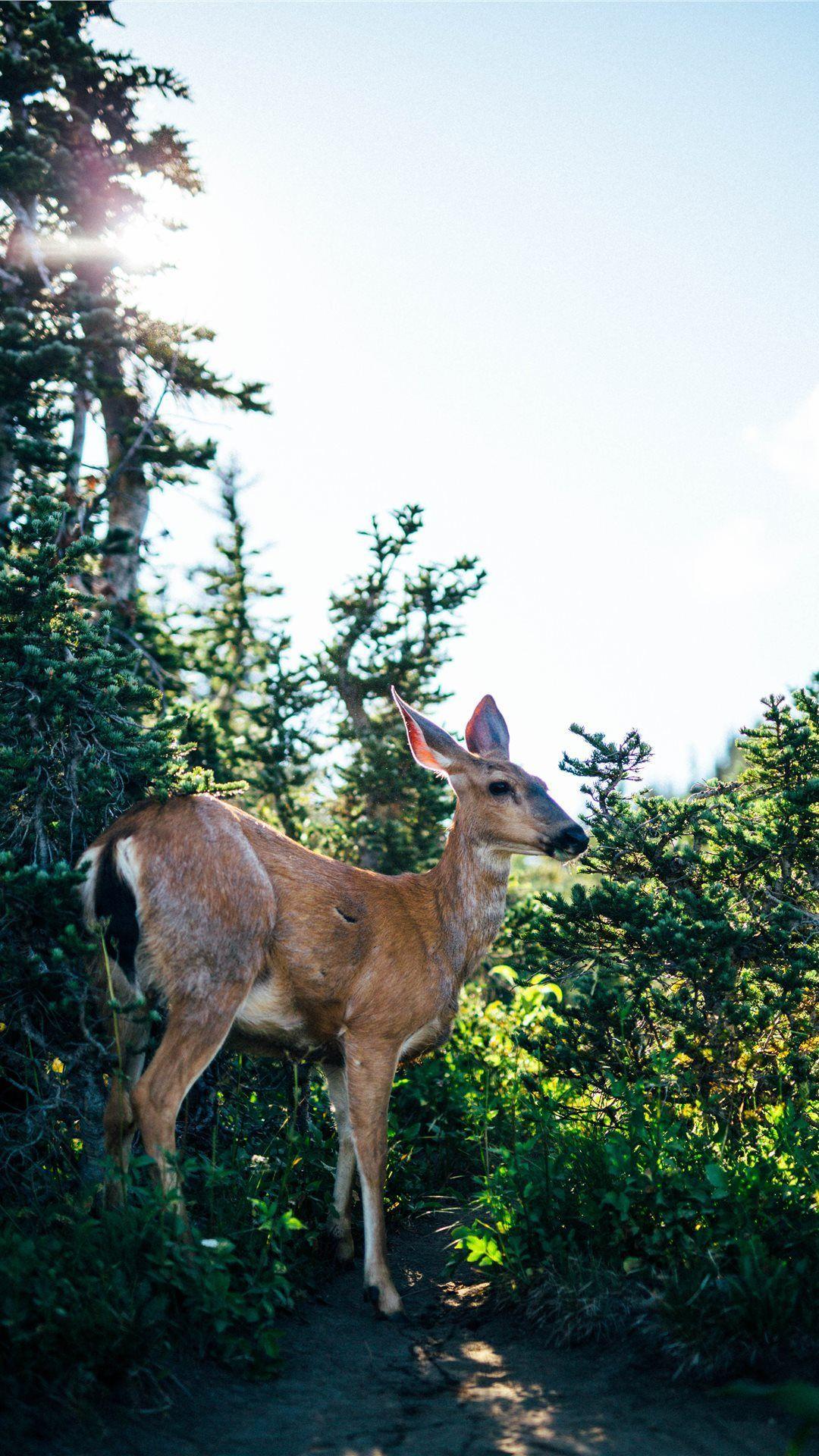 Deer iPhone Wallpapers - Top Free Deer iPhone Backgrounds ...