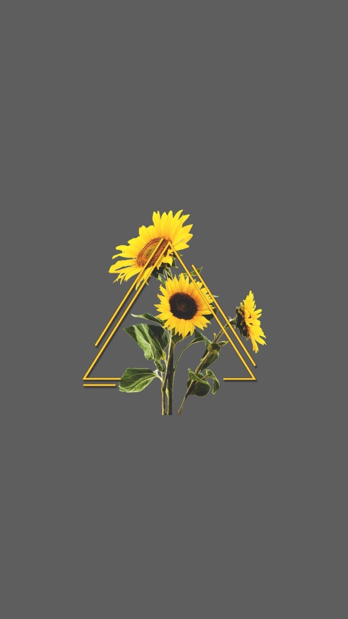 Sunflower Aesthetic Wallpapers Top Free Sunflower