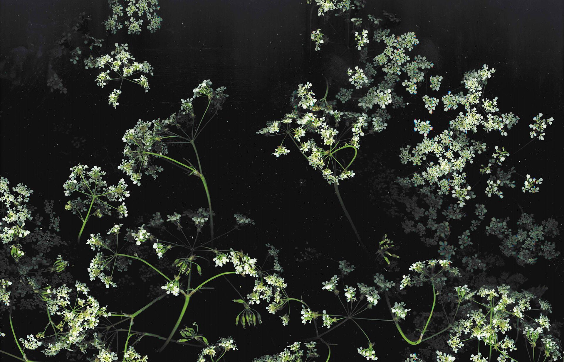 Dark Flowers Desktop Wallpapers Top Free Dark Flowers Desktop