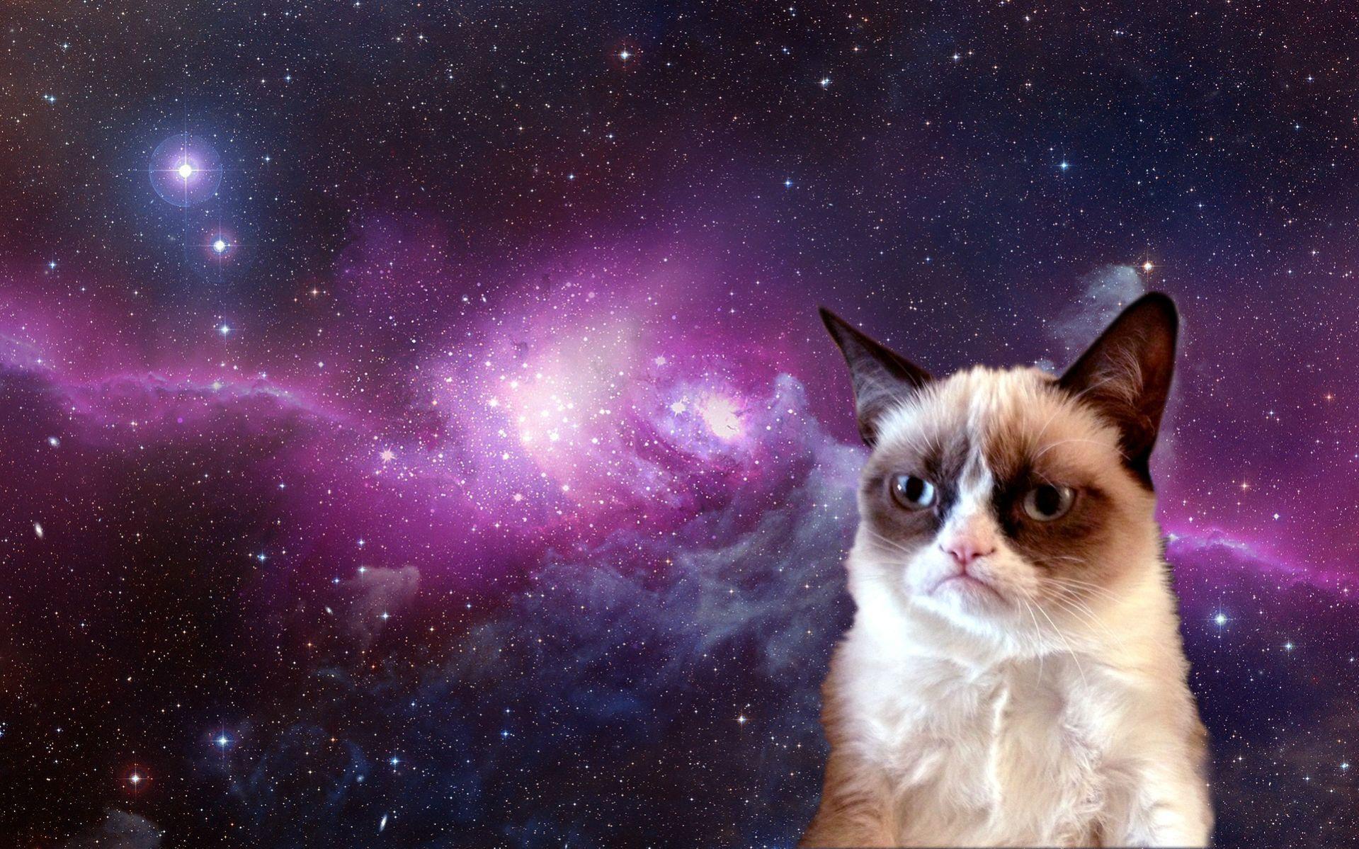 Galaxy Cat Desktop Wallpapers Top Free Galaxy Cat Desktop Backgrounds Wallpaperaccess
