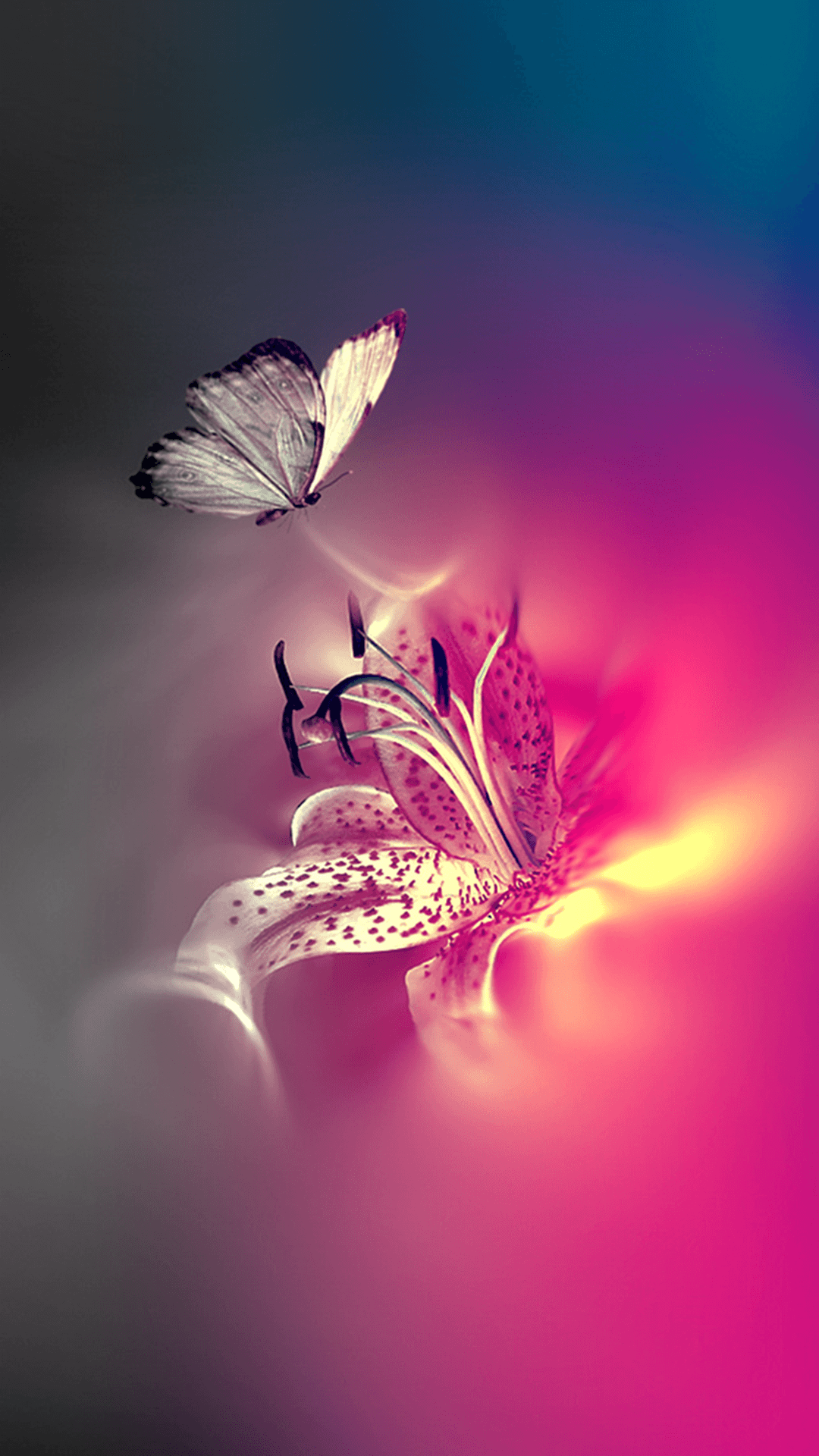 Midnight Purple Butterfly Wallpapers Top Free Midnight Purple Butterfly Backgrounds Wallpaperaccess