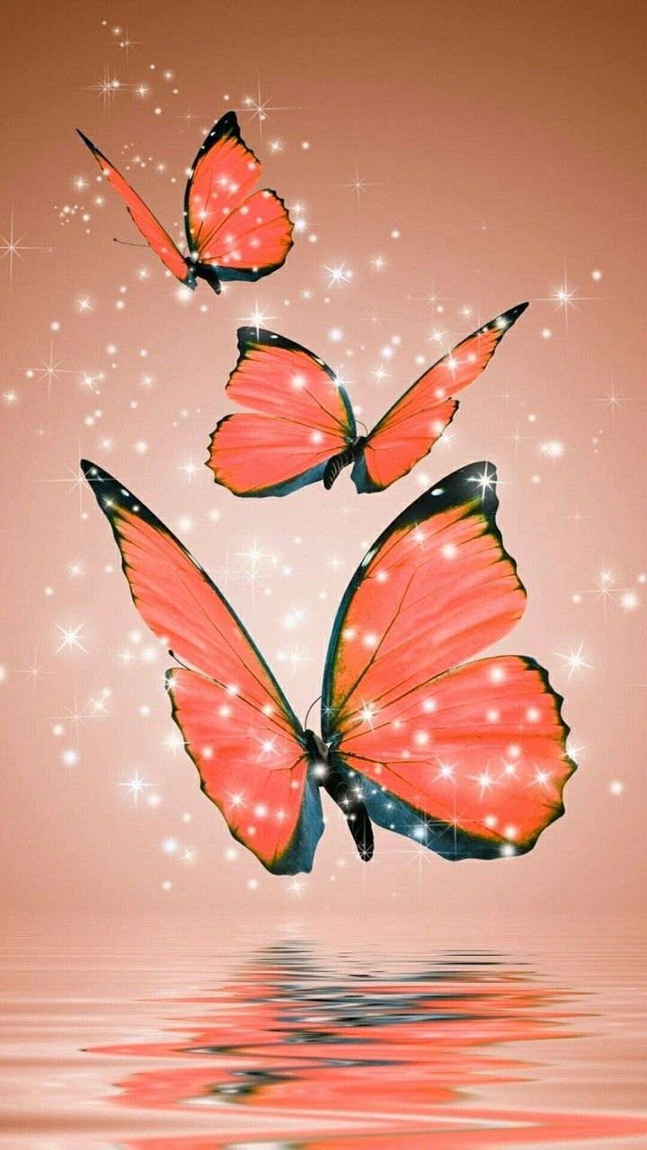 Orange Butterfly Wallpapers Top Free Orange Butterfly Backgrounds Wallpaperaccess