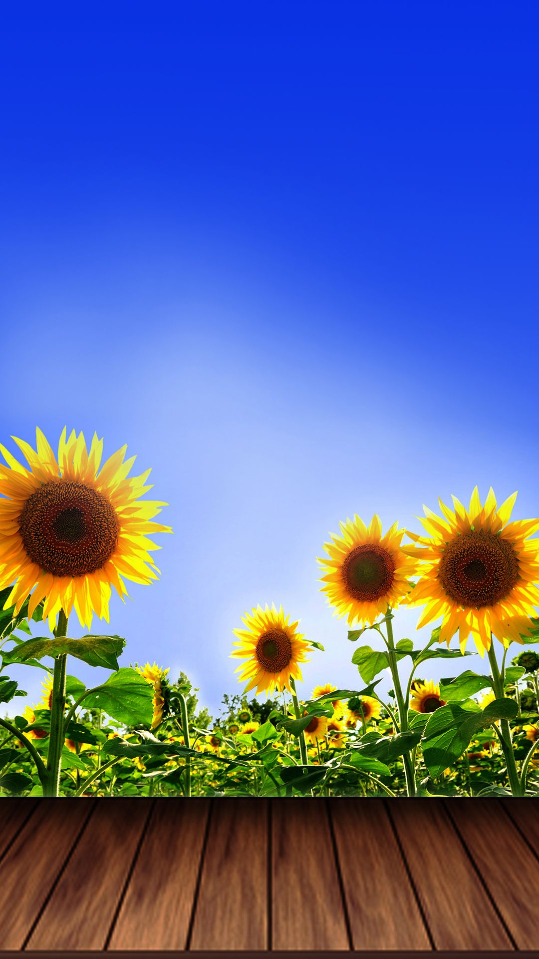 Sunflowers iPhone Wallpapers - Top Free Sunflowers iPhone ...