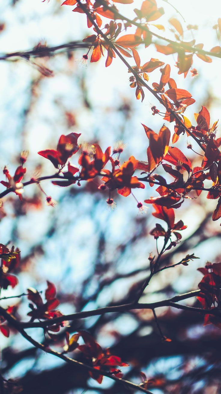 Fall Aesthetic Wallpapers   Top Free Fall Aesthetic Backgrounds ...