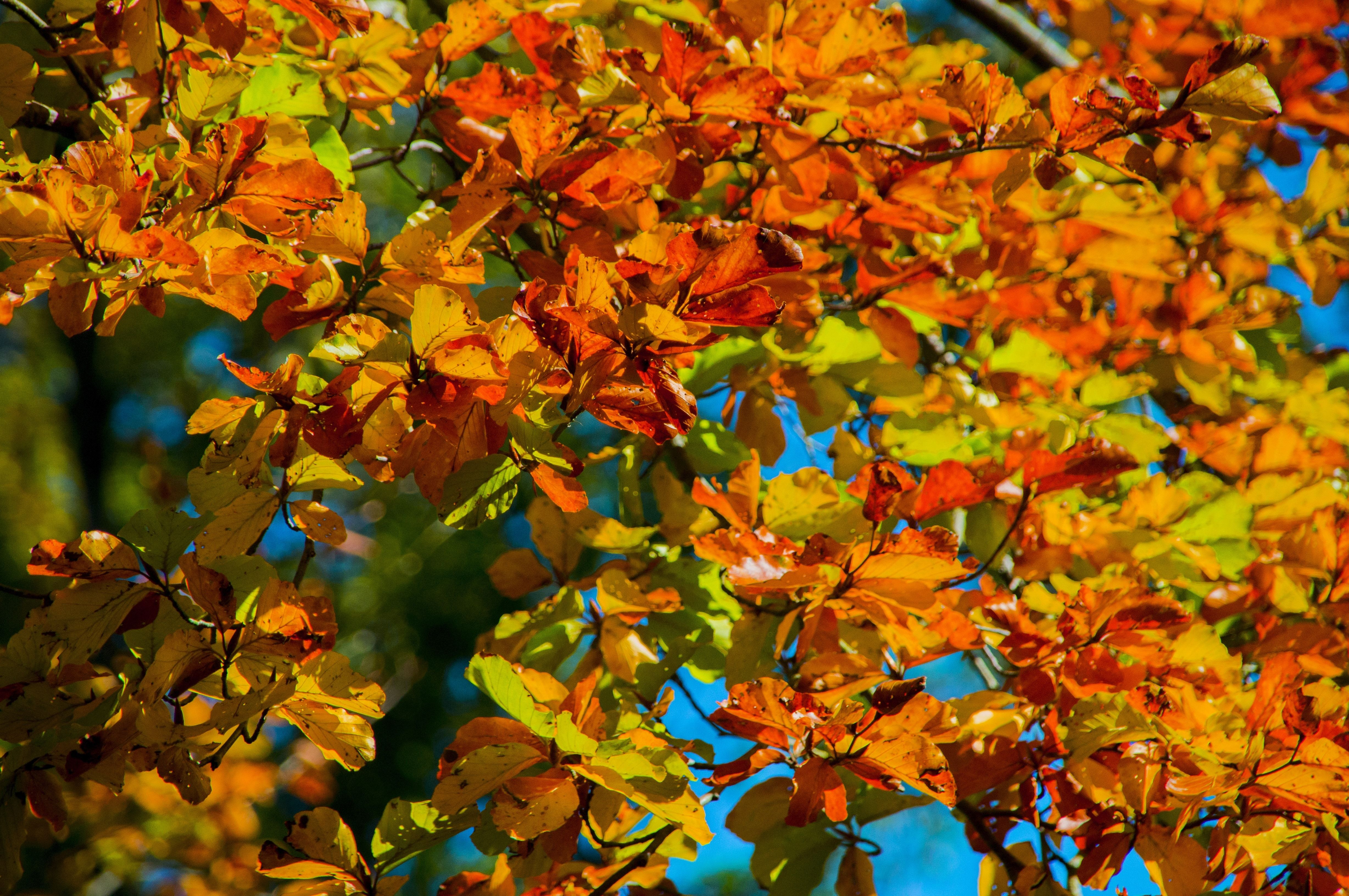 Fall Aesthetic Wallpapers - Top Free Fall Aesthetic ...
