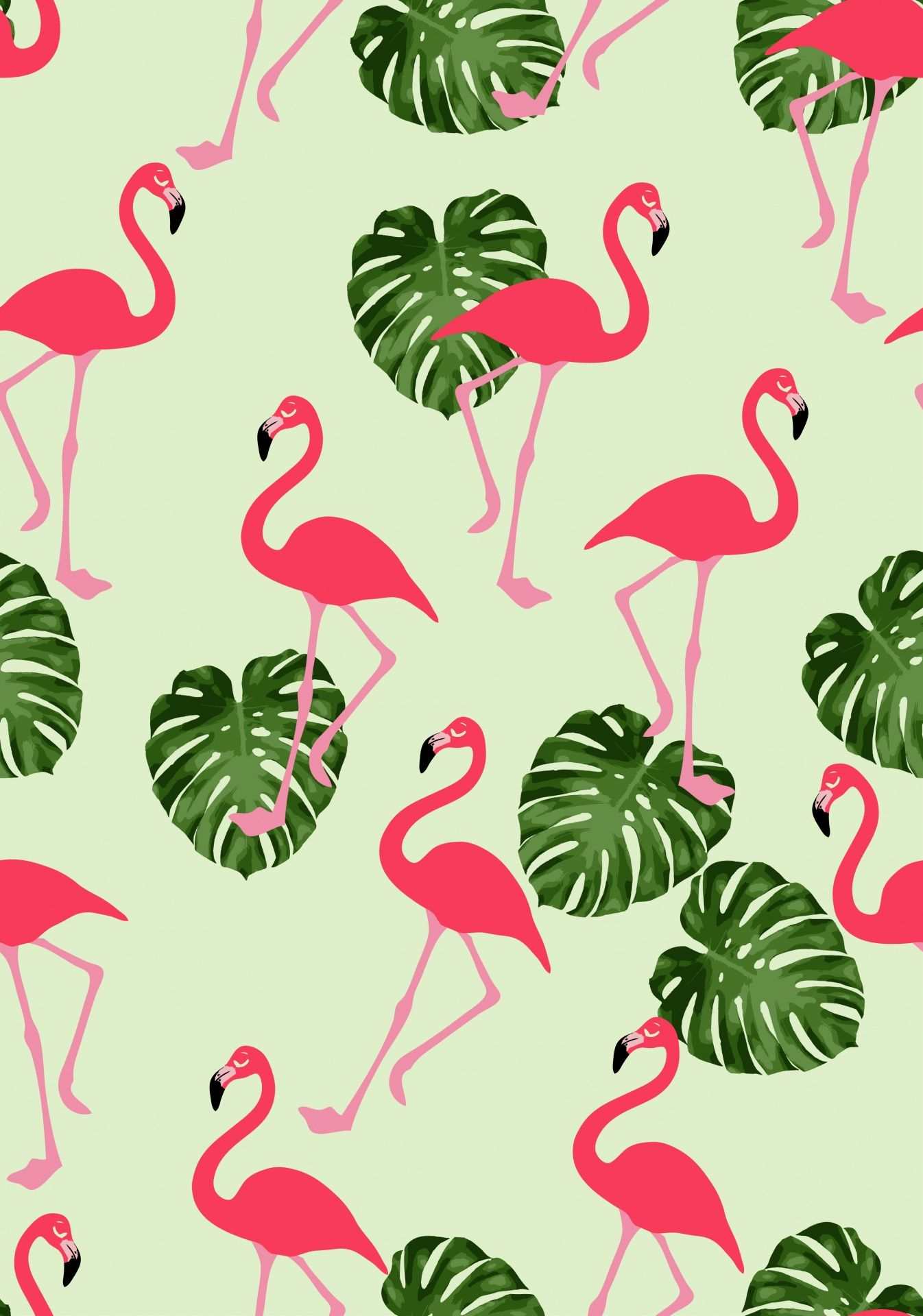 Flamingo Wallpapers Top Free Flamingo Backgrounds