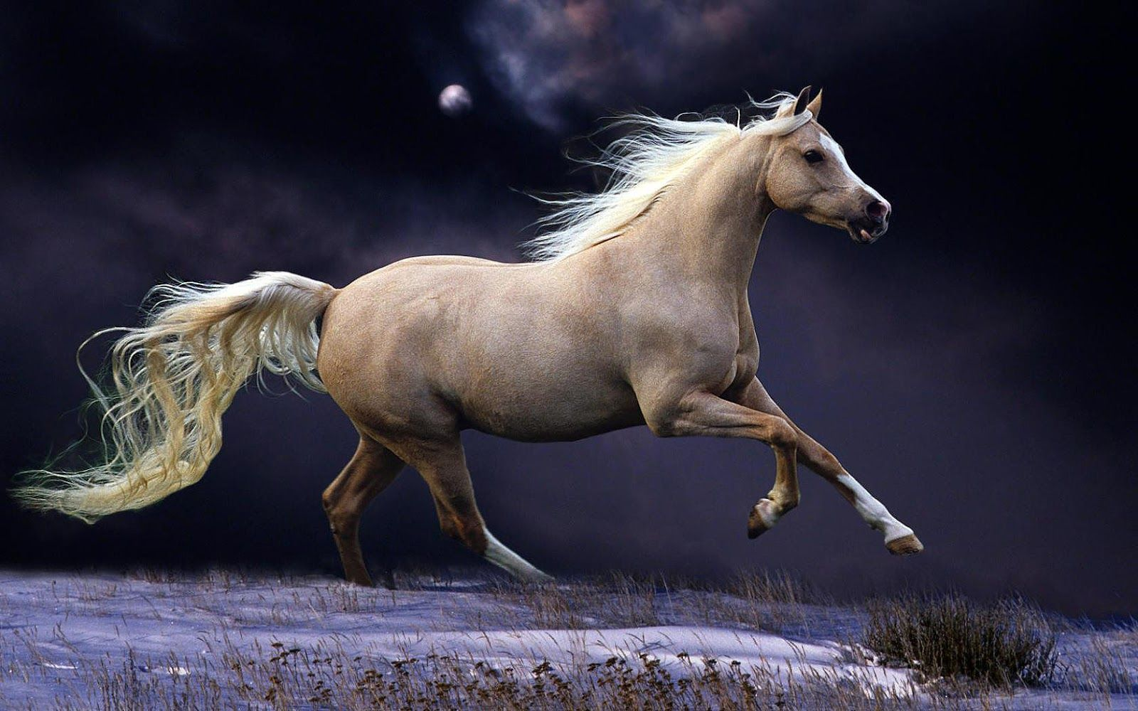 Girly Horse Wallpapers Top Free Girly Horse Backgrounds