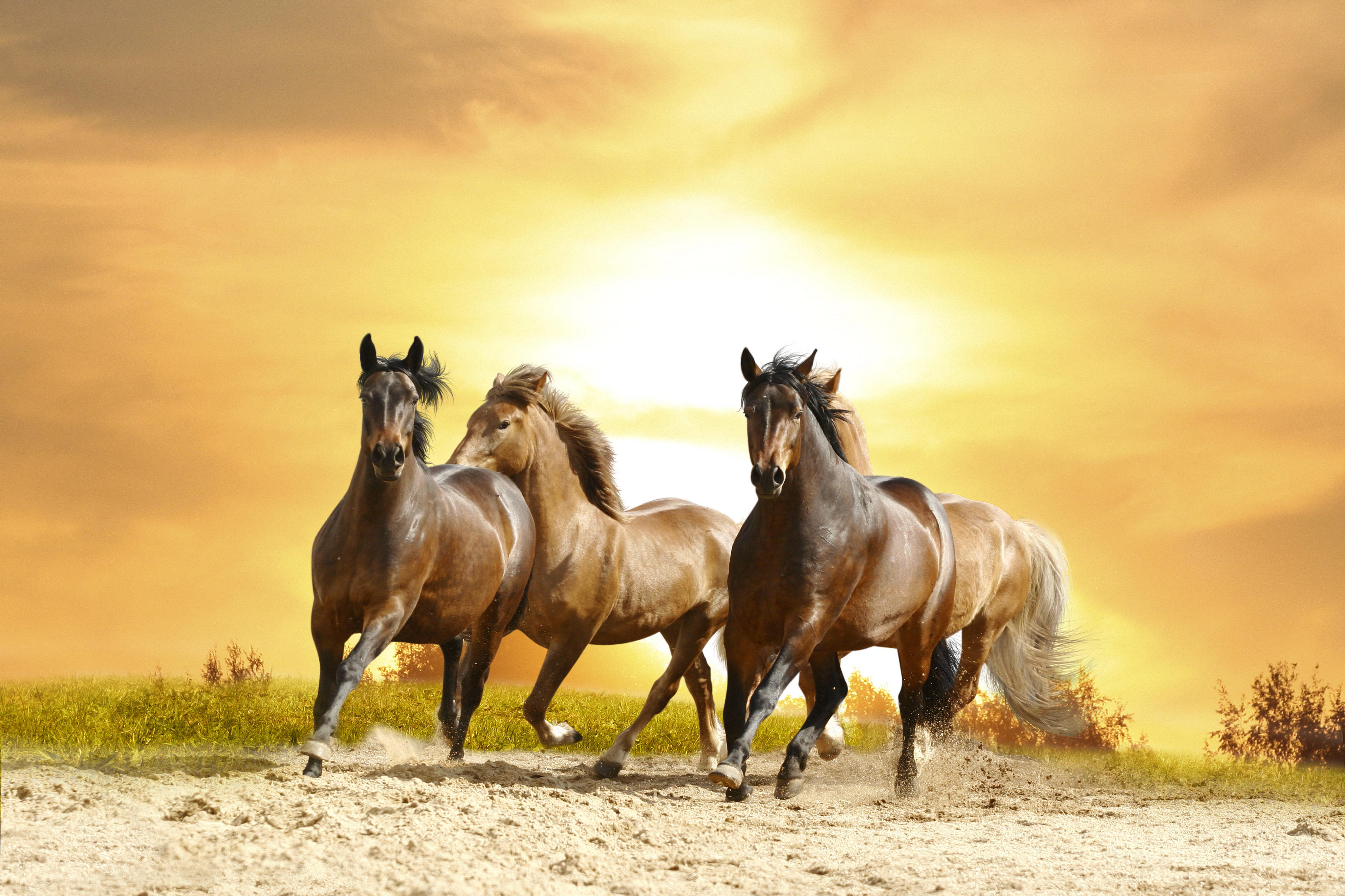 Wallpaper Hd Horse Download