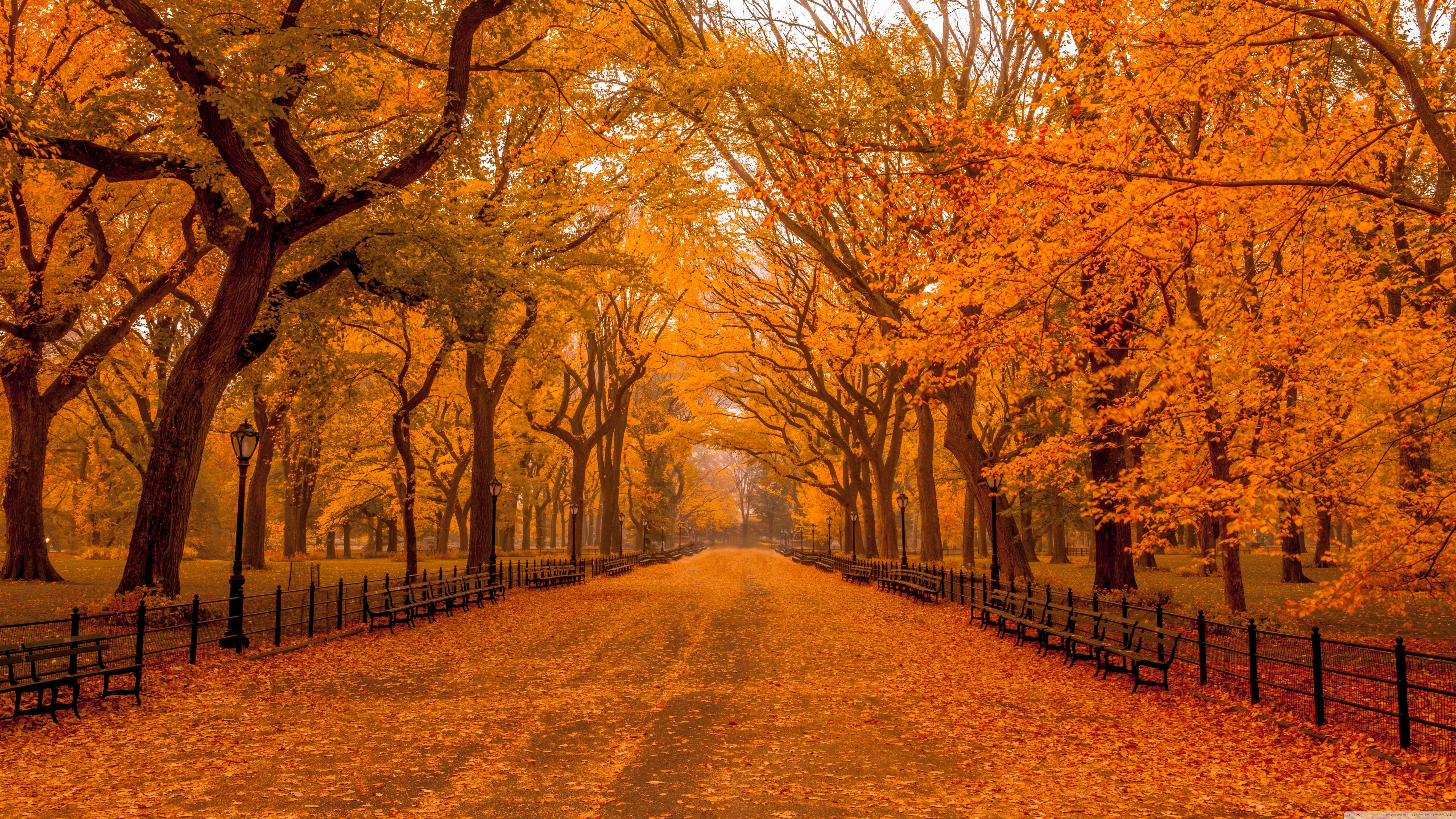 Ultra Hd Autumn Wallpapers Top Free Ultra Hd Autumn Backgrounds Wallpaperaccess