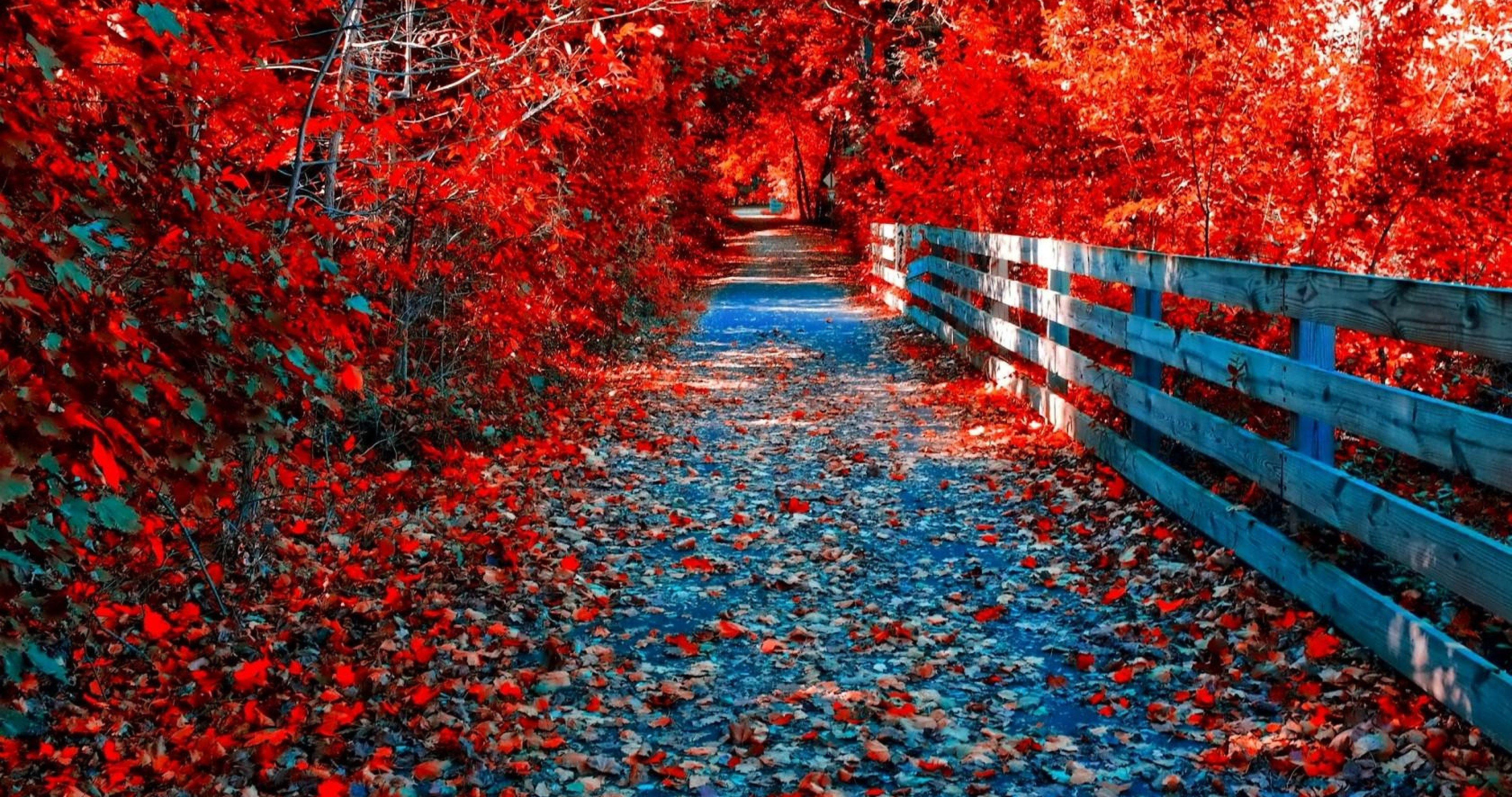 4k Ultra Hd Autumn Wallpapers Top Free 4k Ultra Hd Autumn Backgrounds Wallpaperaccess