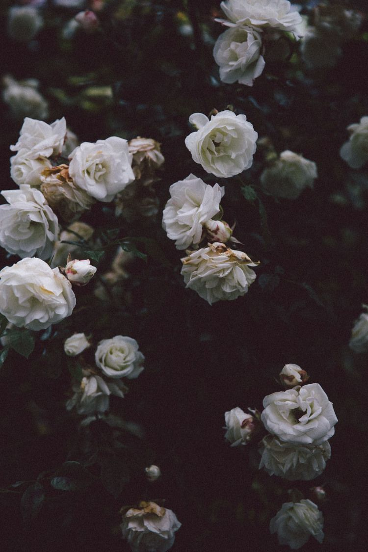 Aesthetic Black And White Background Flowers Largest Wallpaper Portal