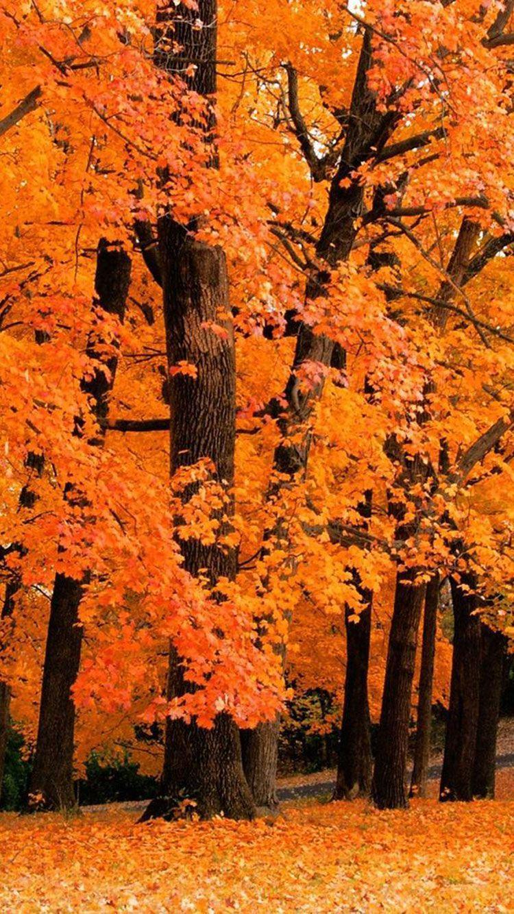 750x1334 Miễn phí Tuyệt vời Mùa thu Nền Hình nền iPhone Cho Thẩm mỹ Mùa thu - Hình nền mùa thu dễ thương rơi backgr vào năm 2020. Hình nền mùa thu iPhone, Hình nền mùa thu, Nền mùa thu