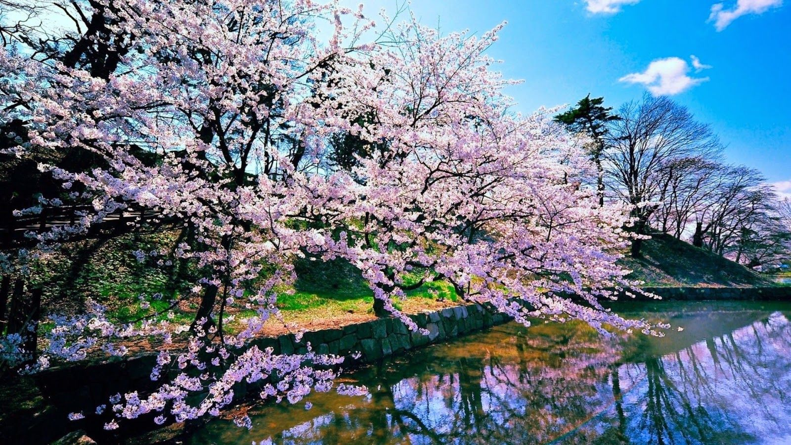 Japan Nature Wallpapers Top Free Japan Nature Backgrounds