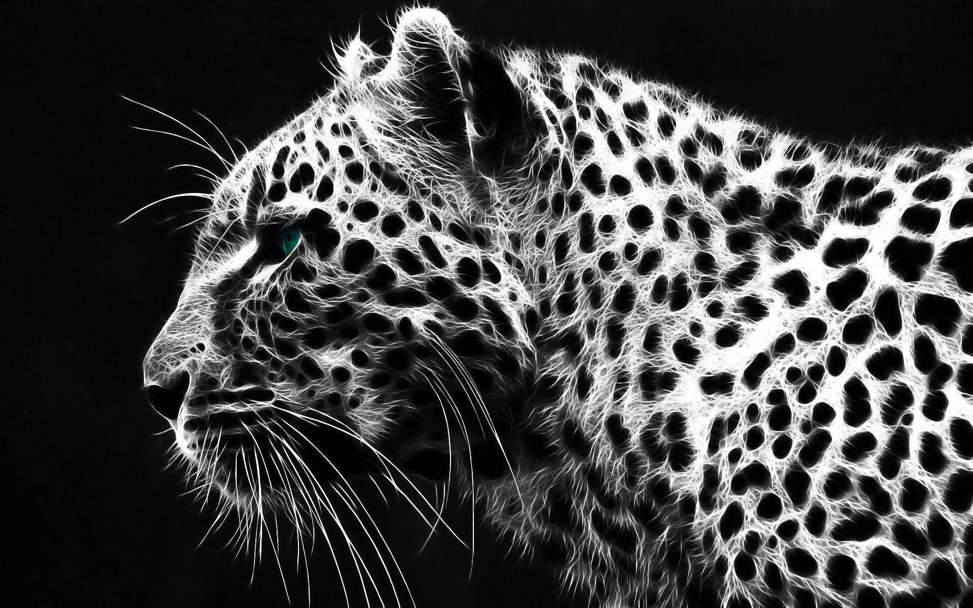 1920x1200 Black Cheetah hình nền