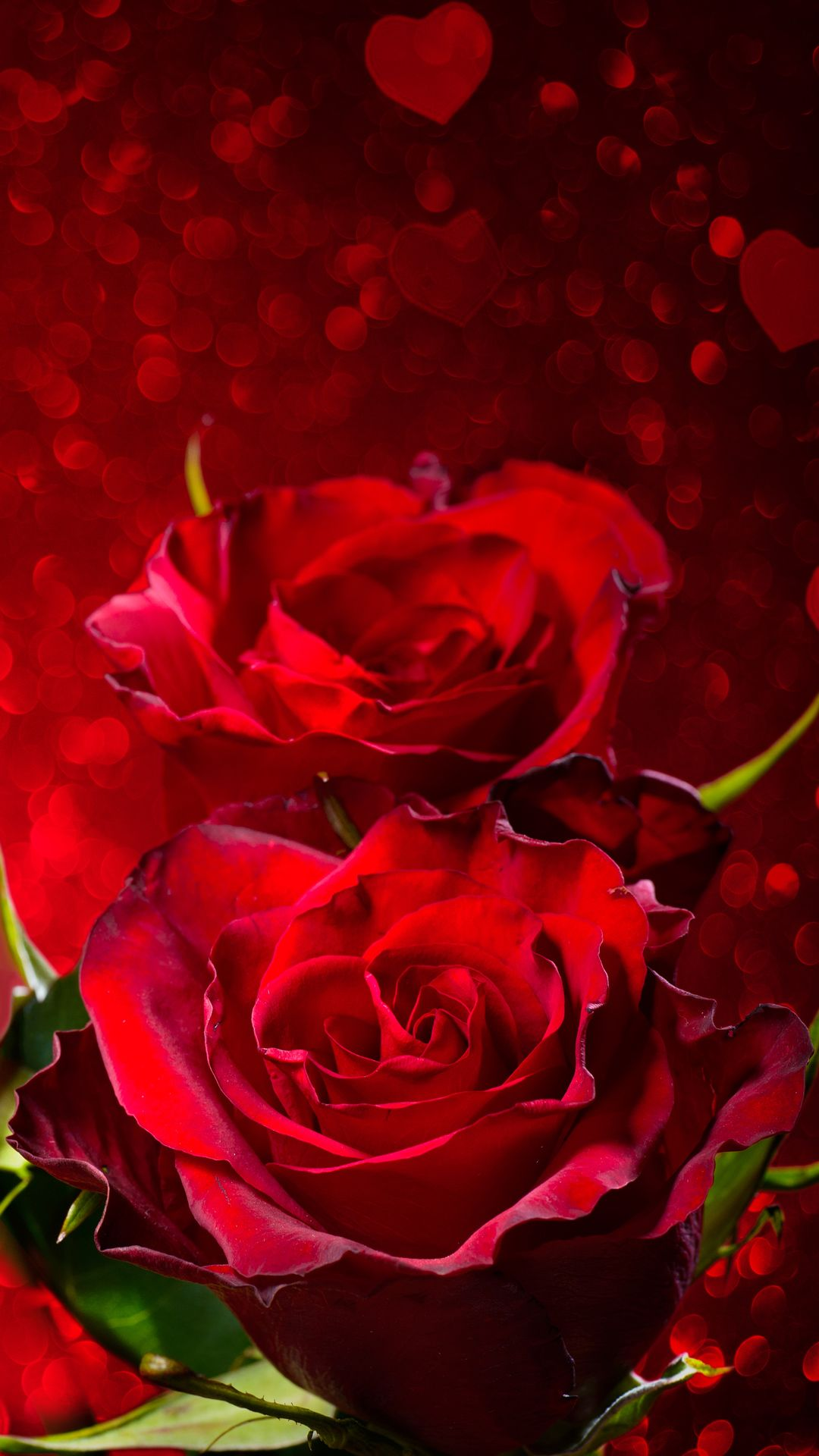 Rose Iphone Wallpapers Top Free Rose Iphone Backgrounds