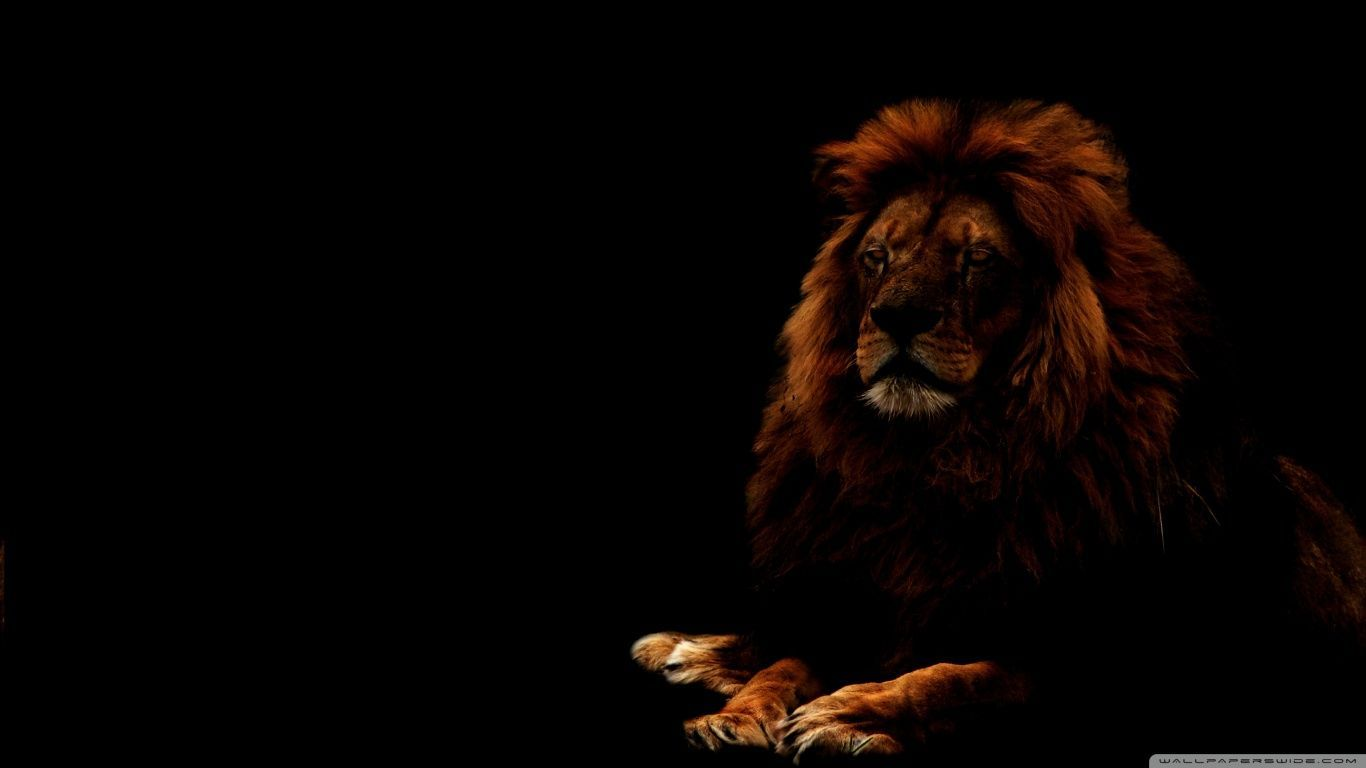 Ultra Hd Lions Wallpapers Top Free Ultra Hd Lions Backgrounds