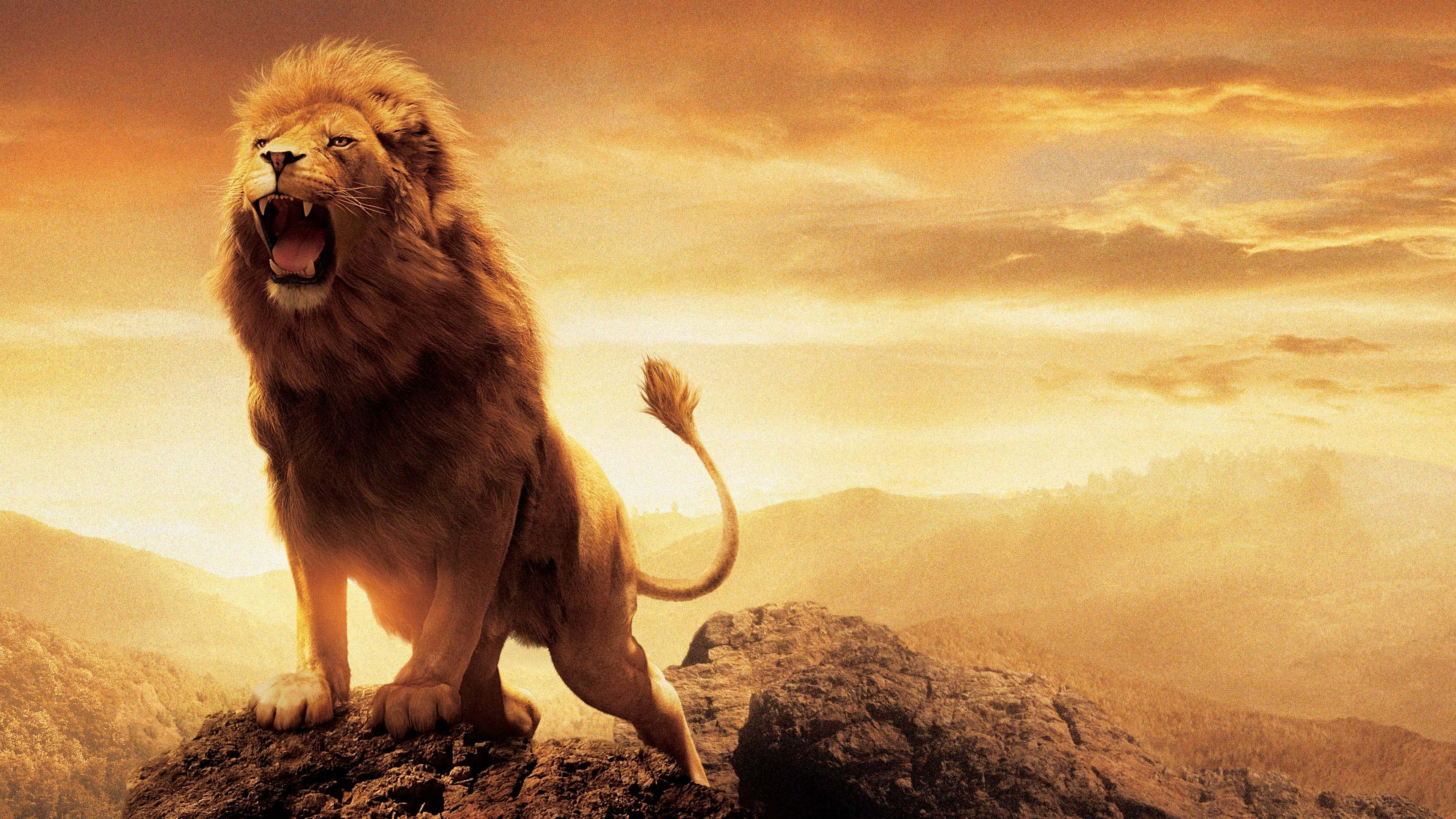 Lion 8k Wallpapers Top Free Lion 8k Backgrounds Wallpaperaccess Images, Photos, Reviews