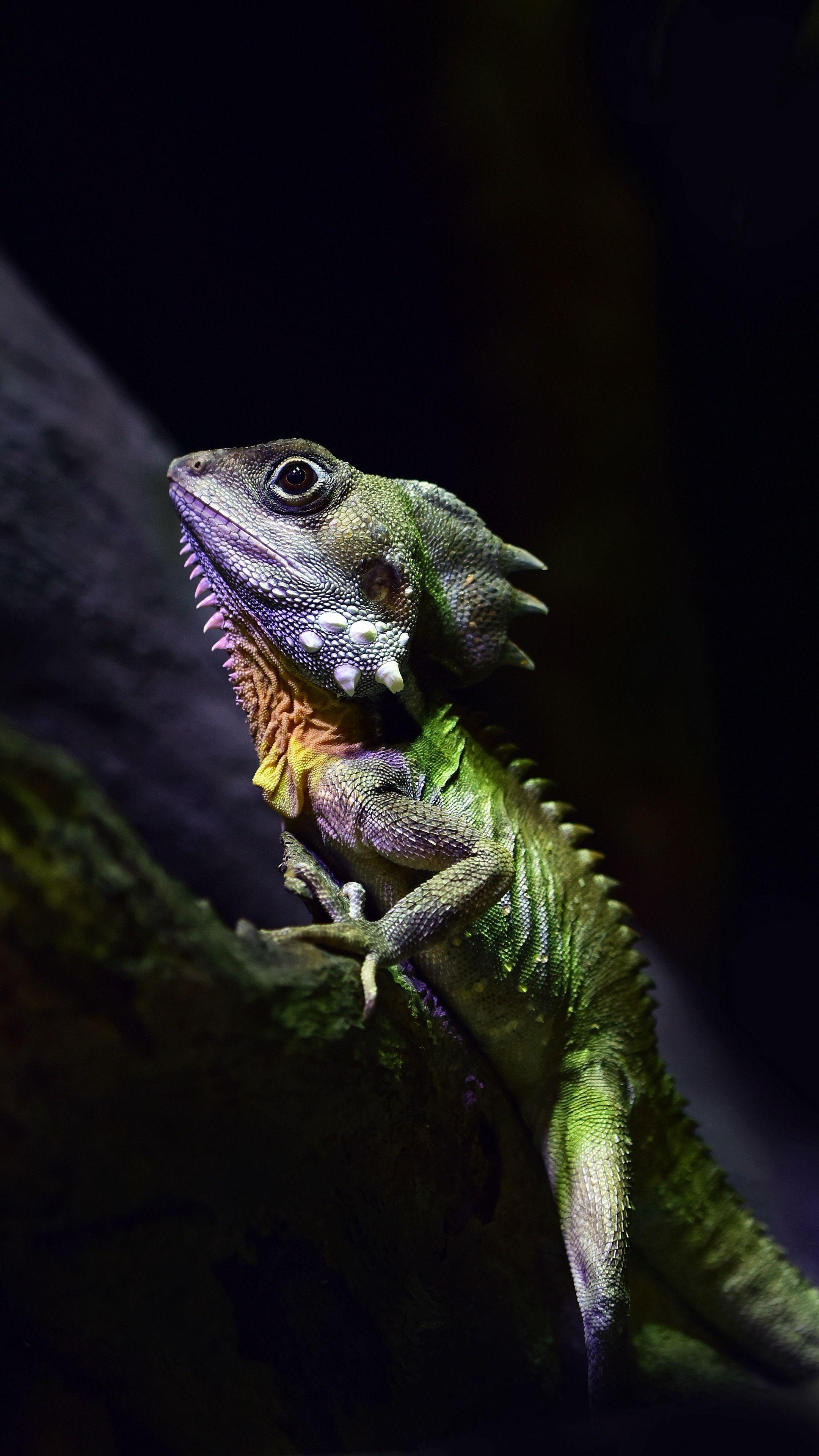 Lizard iPhone Wallpapers - Top Free Lizard iPhone ...
