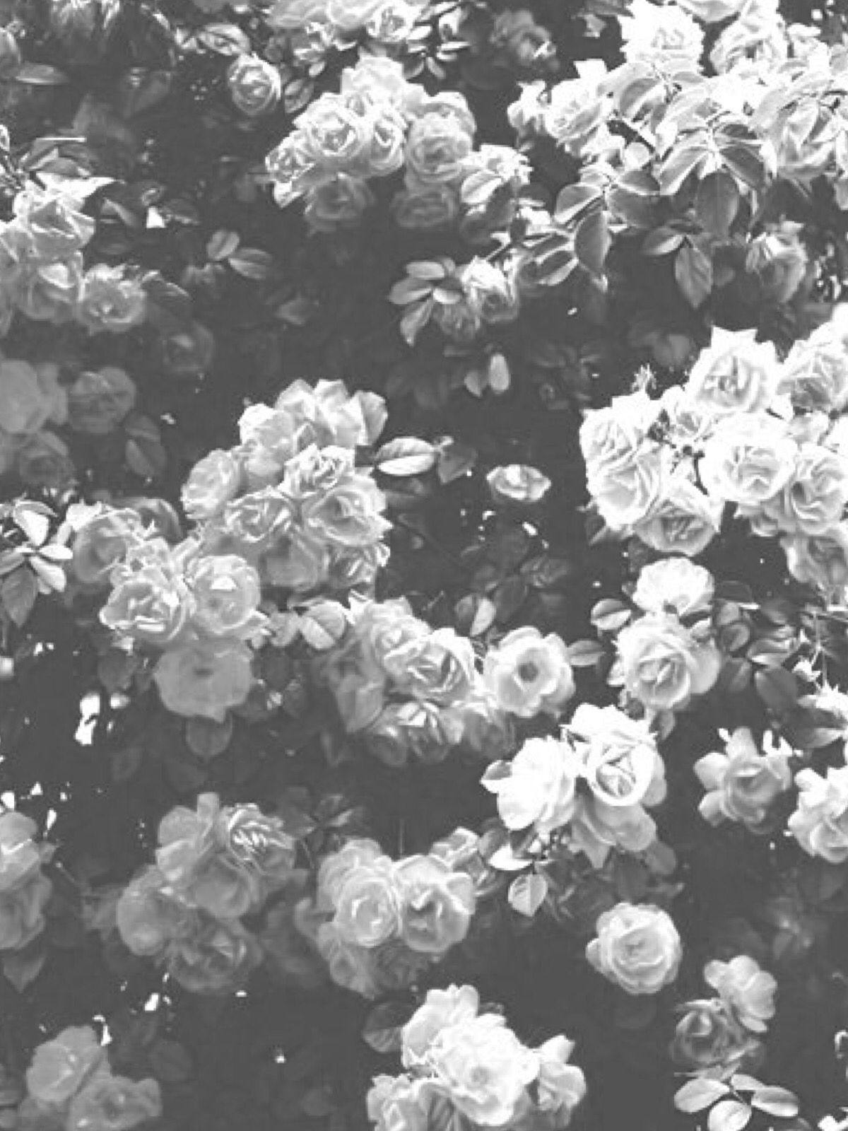 Black And White Aesthetic Flower Wallpapers Top Free Black