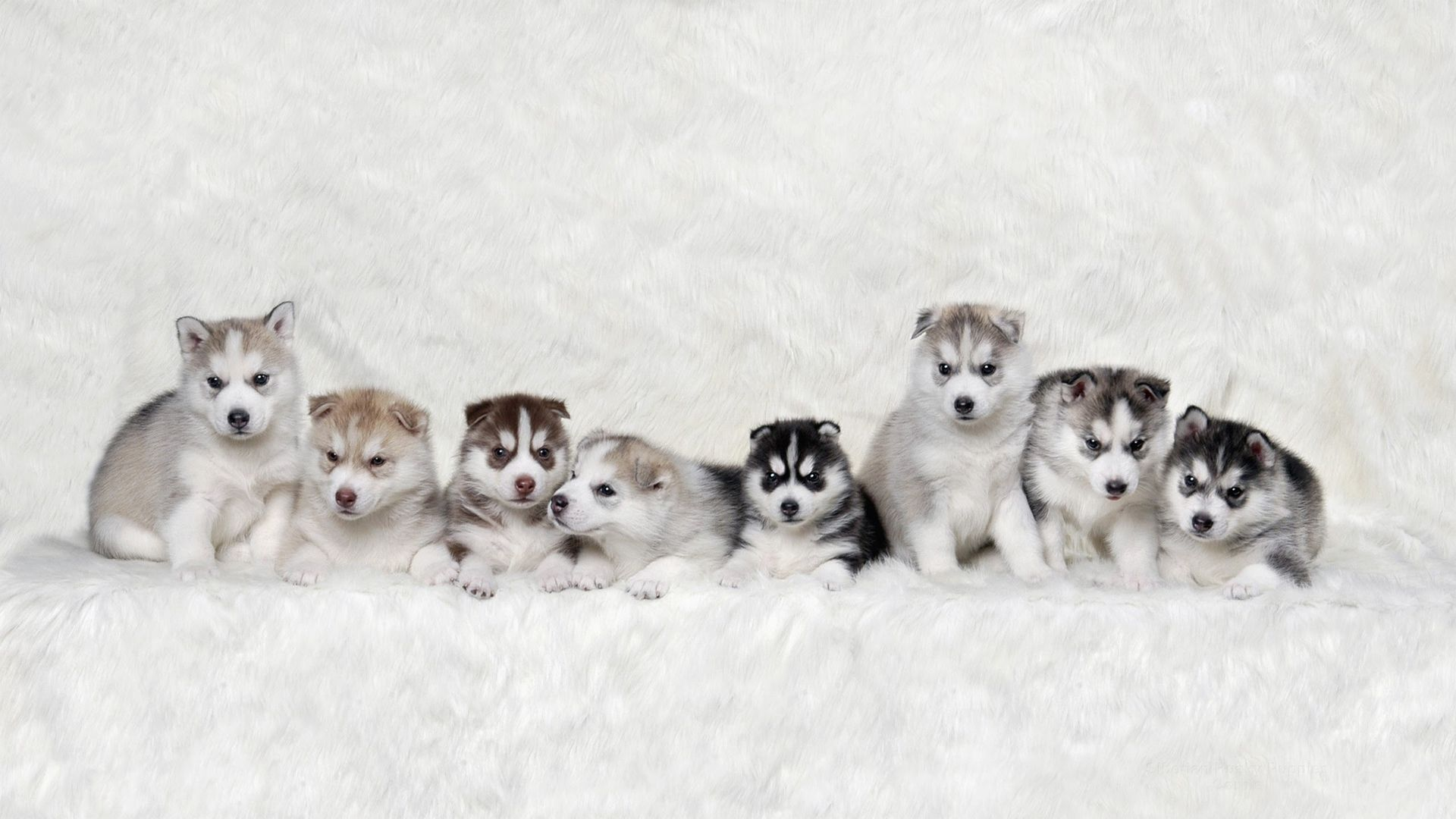 Cute Winter Puppy Wallpapers - Top Free