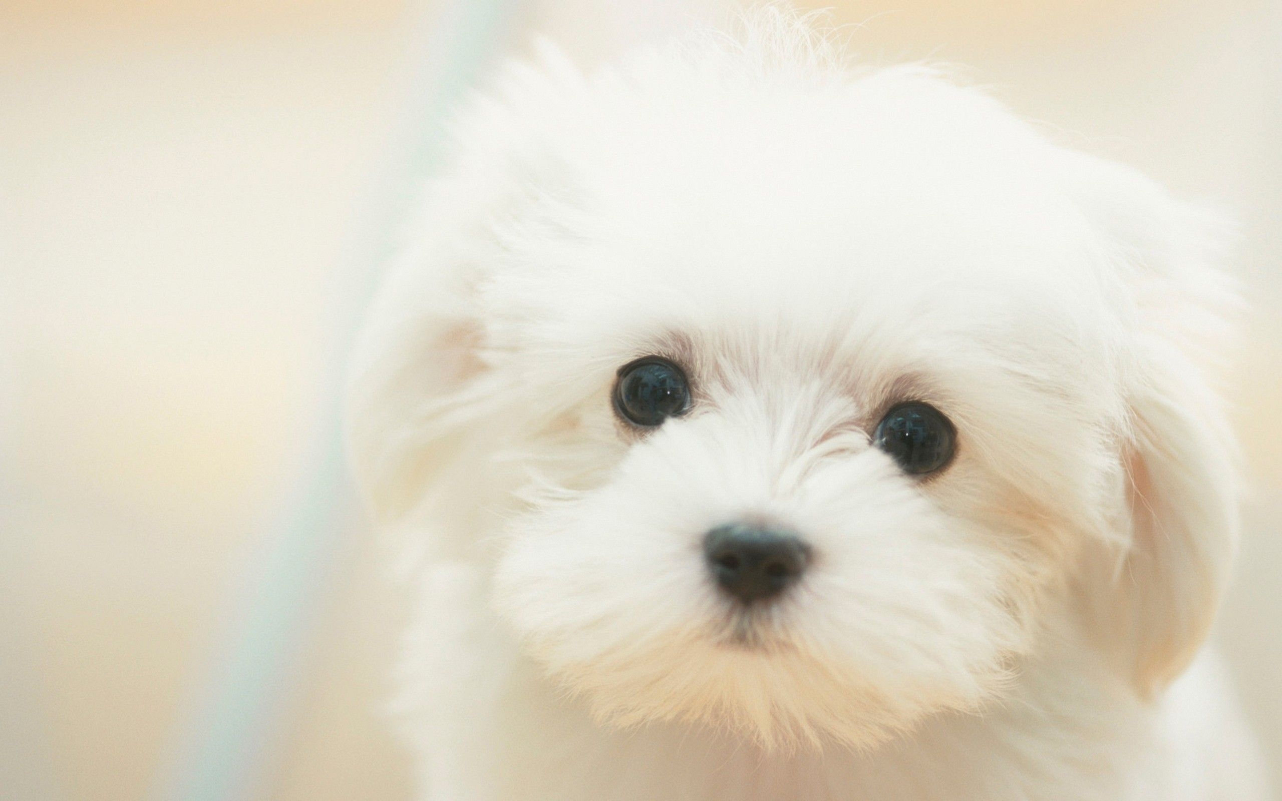 Cute Winter Puppy Wallpapers Top Free Cute Winter Puppy Backgrounds Wallpaperaccess