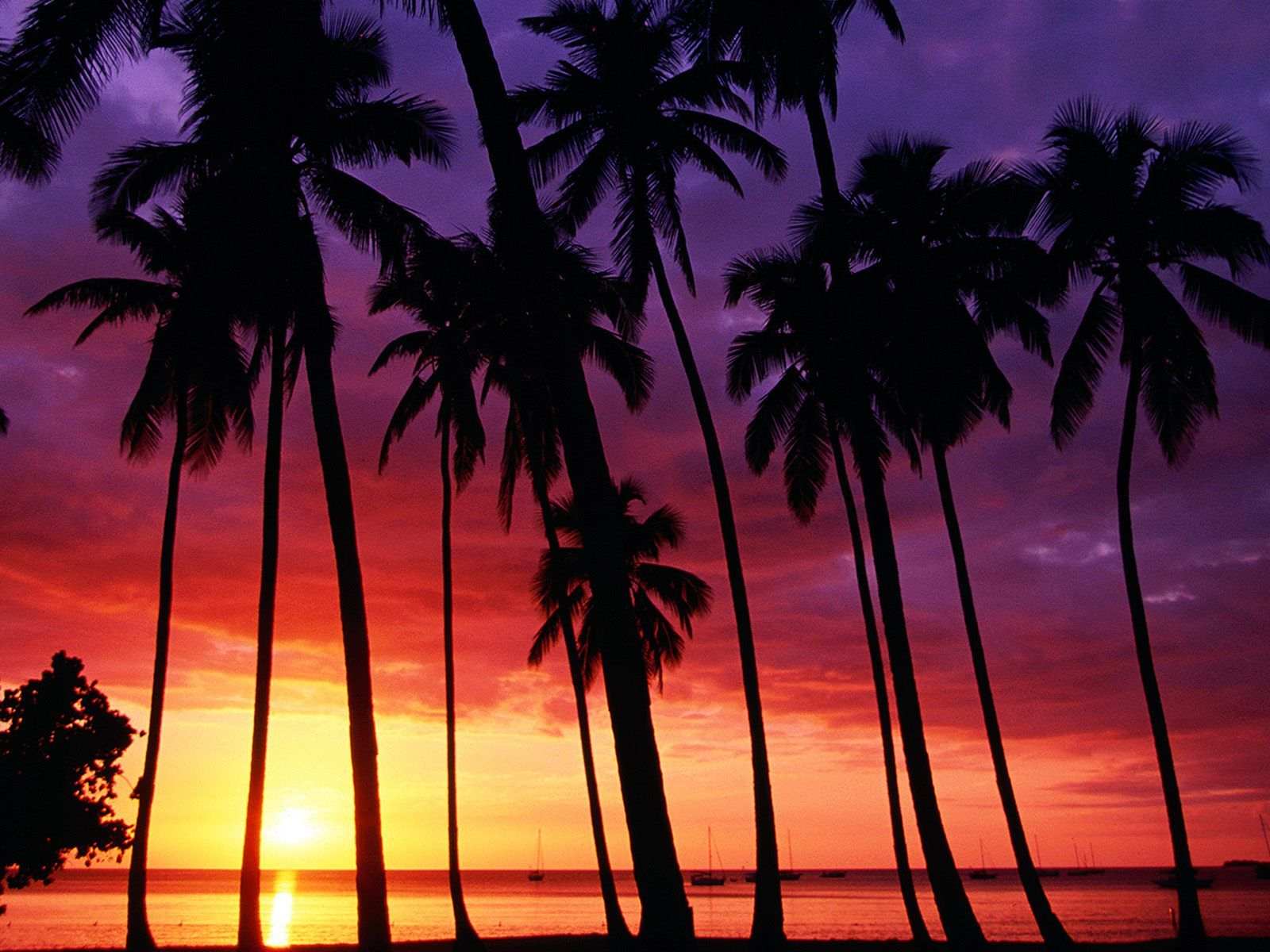Pink Tropical Beach Wallpapers Top Free Pink Tropical Beach