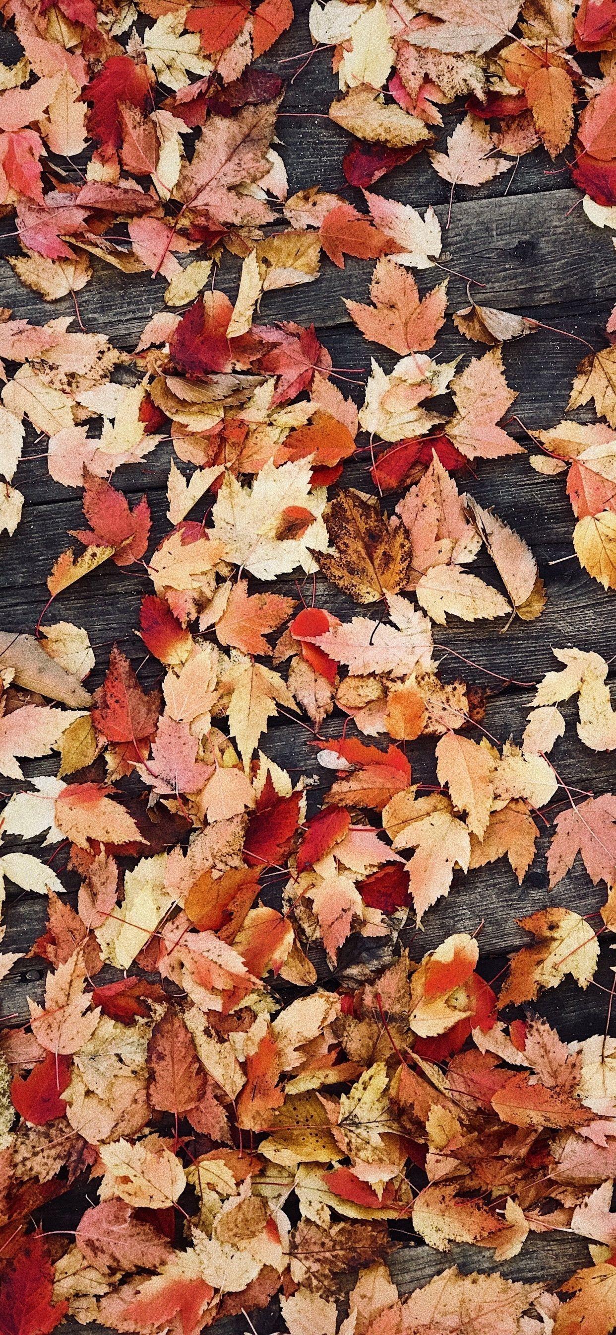 Hình nền 1242x2688 Cuối tuần: Mùa thu Hình nền iPhone XS Max
