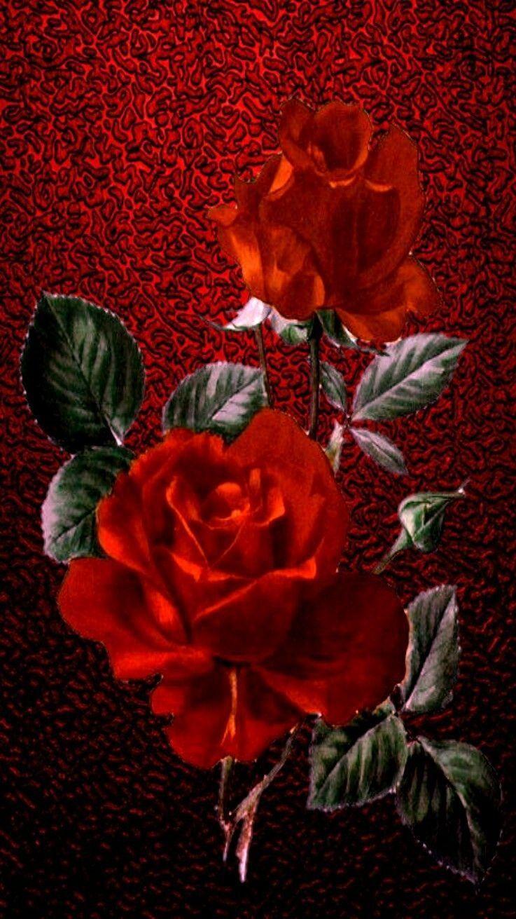 vintage rose iphone wallpapers   top free vintage rose