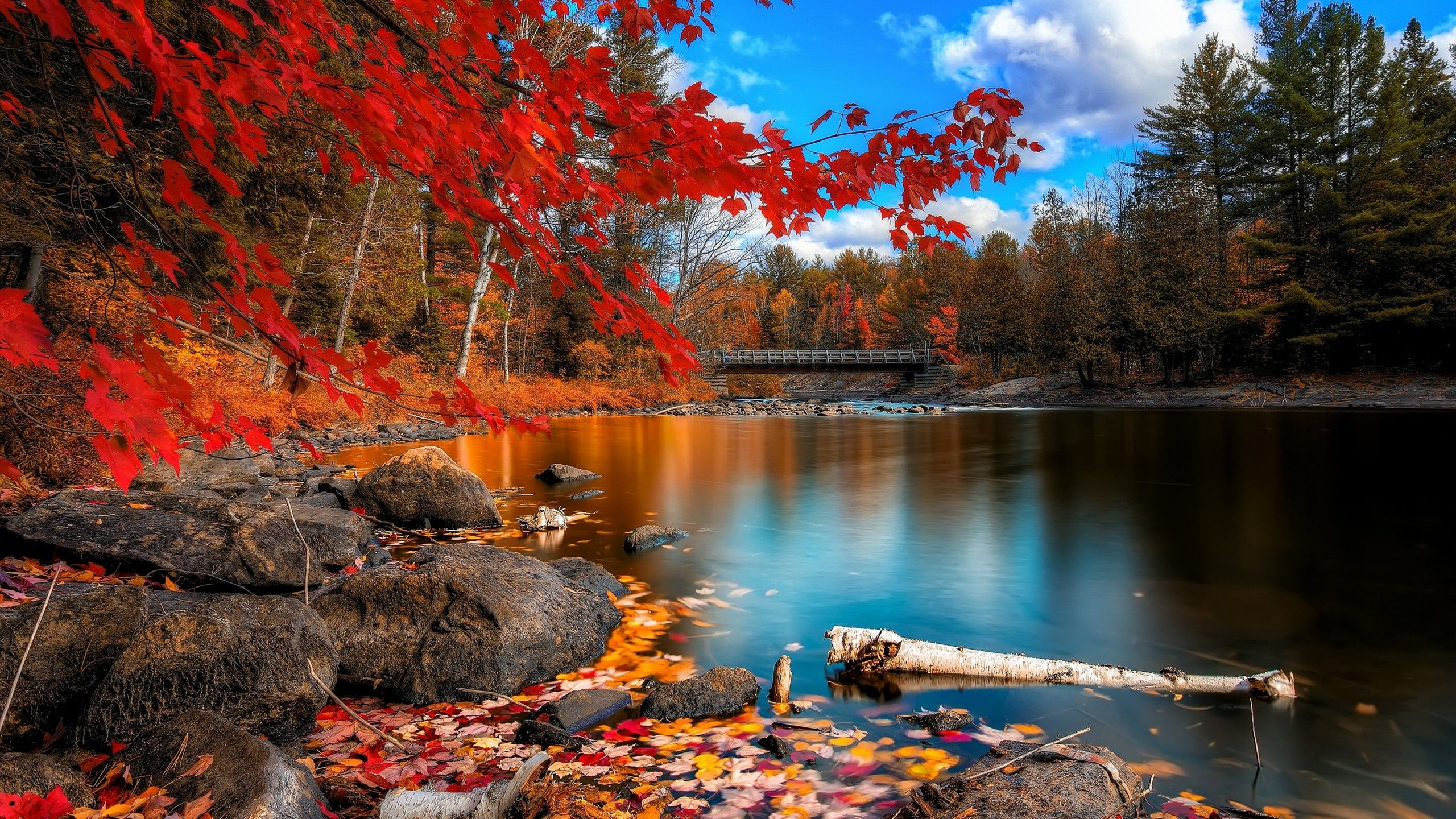 2560x1440 Fall Wallpapers Top Free 2560x1440 Fall Backgrounds Wallpaperaccess