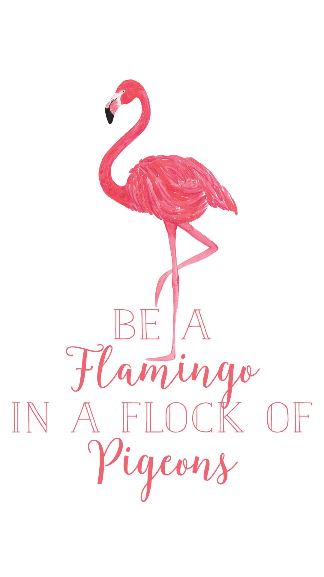 Flamingo Phone Wallpapers Top Free Flamingo Phone Backgrounds