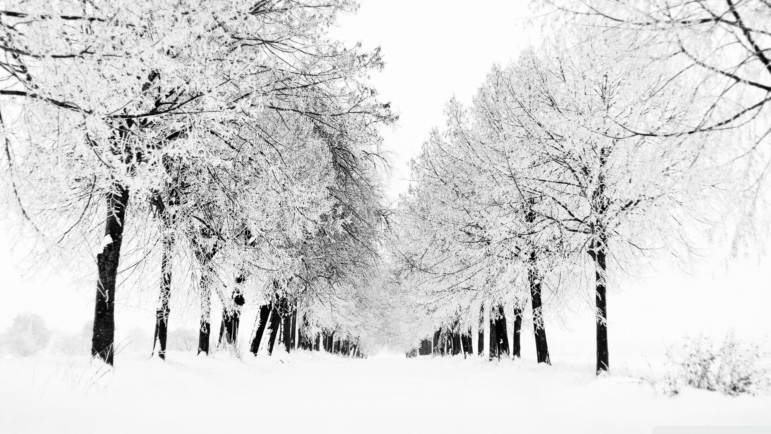 Winter Laptop Wallpapers Top Free Winter Laptop Backgrounds Wallpaperaccess