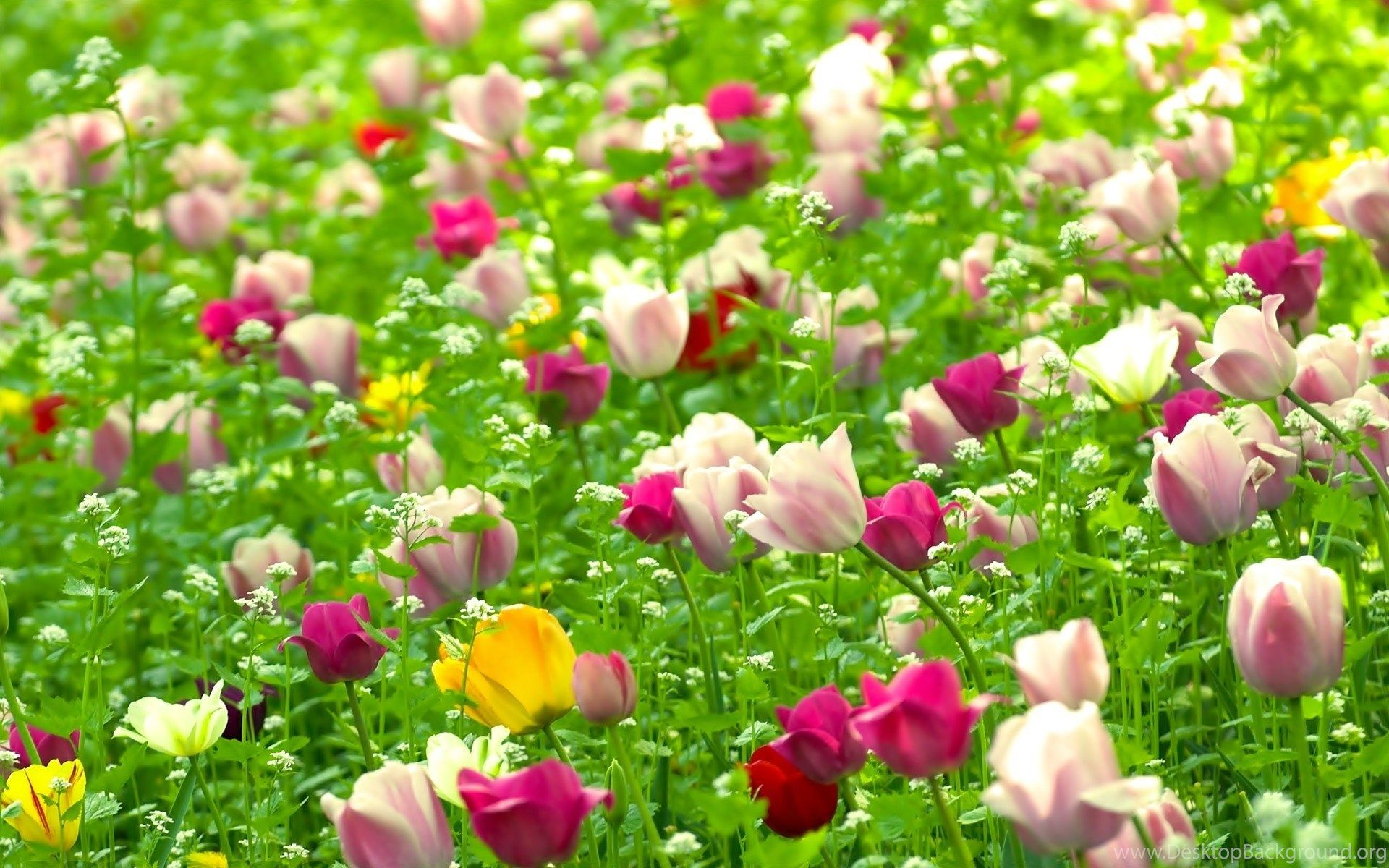 Natural Flower Wallpapers Top Free Natural Flower Backgrounds Wallpaperaccess