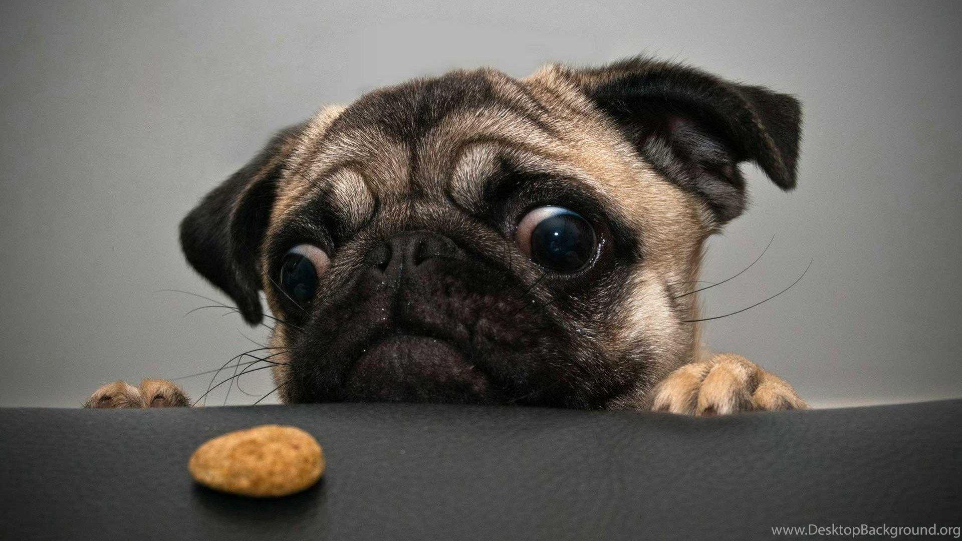 Weird Animals Desktop Wallpapers - Top Free Weird Animals Desktop ...