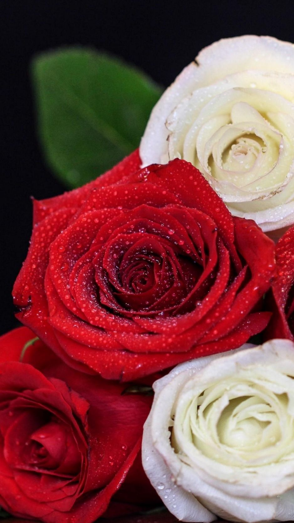 White Red Roses Iphone Wallpapers Top Free White Red Roses Iphone Backgrounds Wallpaperaccess