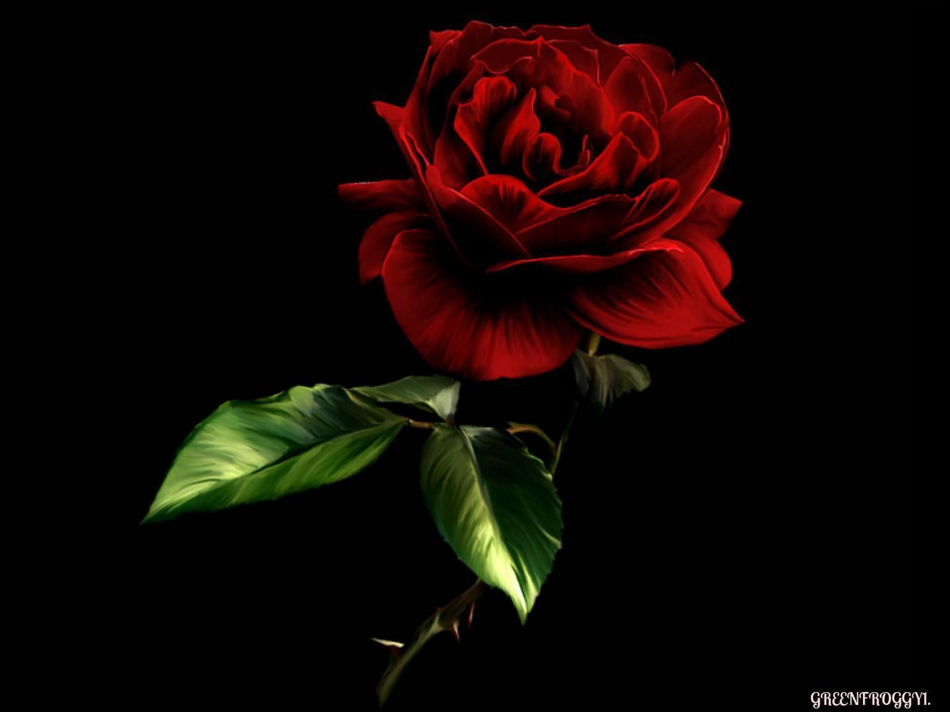 Get Red Roses Backgrounds  PNG