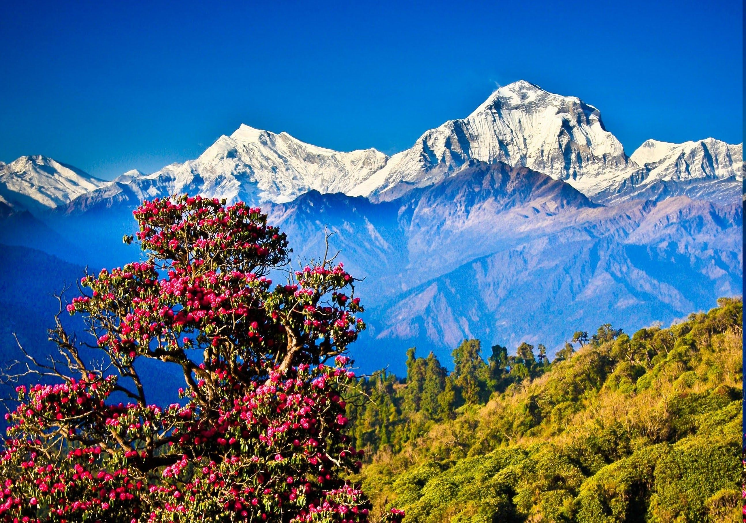 Himalayas Desktop Wallpapers Top Free Himalayas Desktop Backgrounds Wallpaperaccess