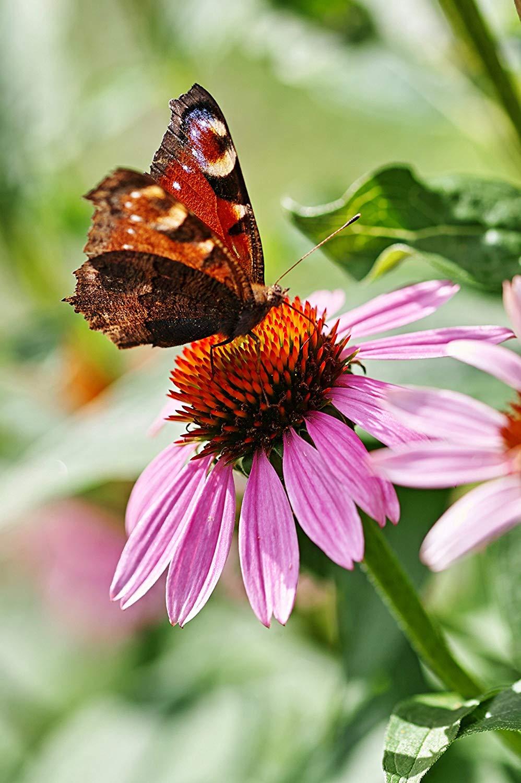 Pastel Flowers Butterflies Wallpapers - Top Free Pastel ...