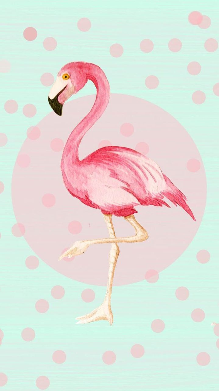 Photography Flamingo Iphone Wallpapers Top Free Photography